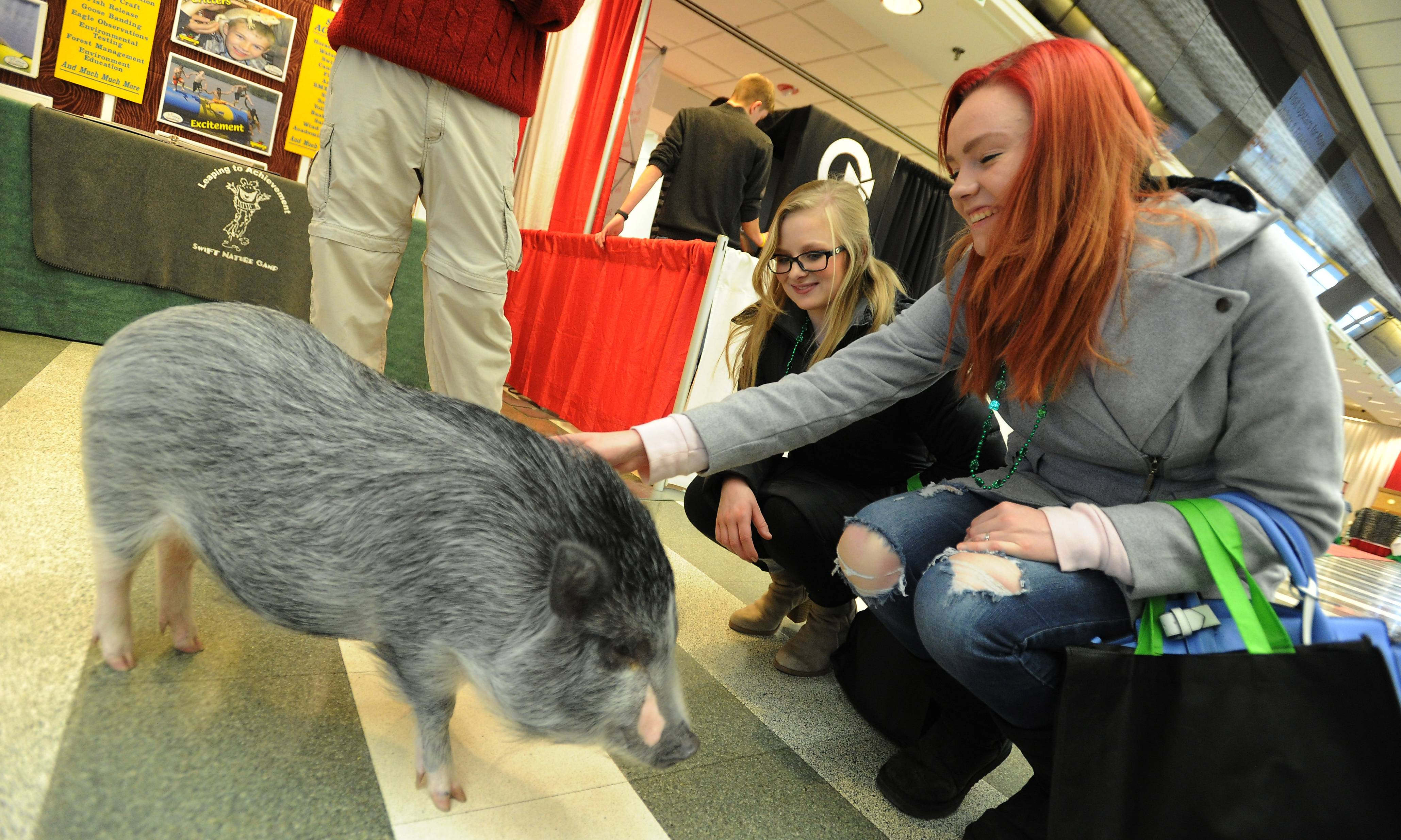 Bubba the Juliana pig greets Samantha Bliss, 18, of Woodstock and her friend Danielle Barnewolt, 19, of Huntley on Friday at the 25th annual Chicagoland Family Pet Expo at Arlington Park.