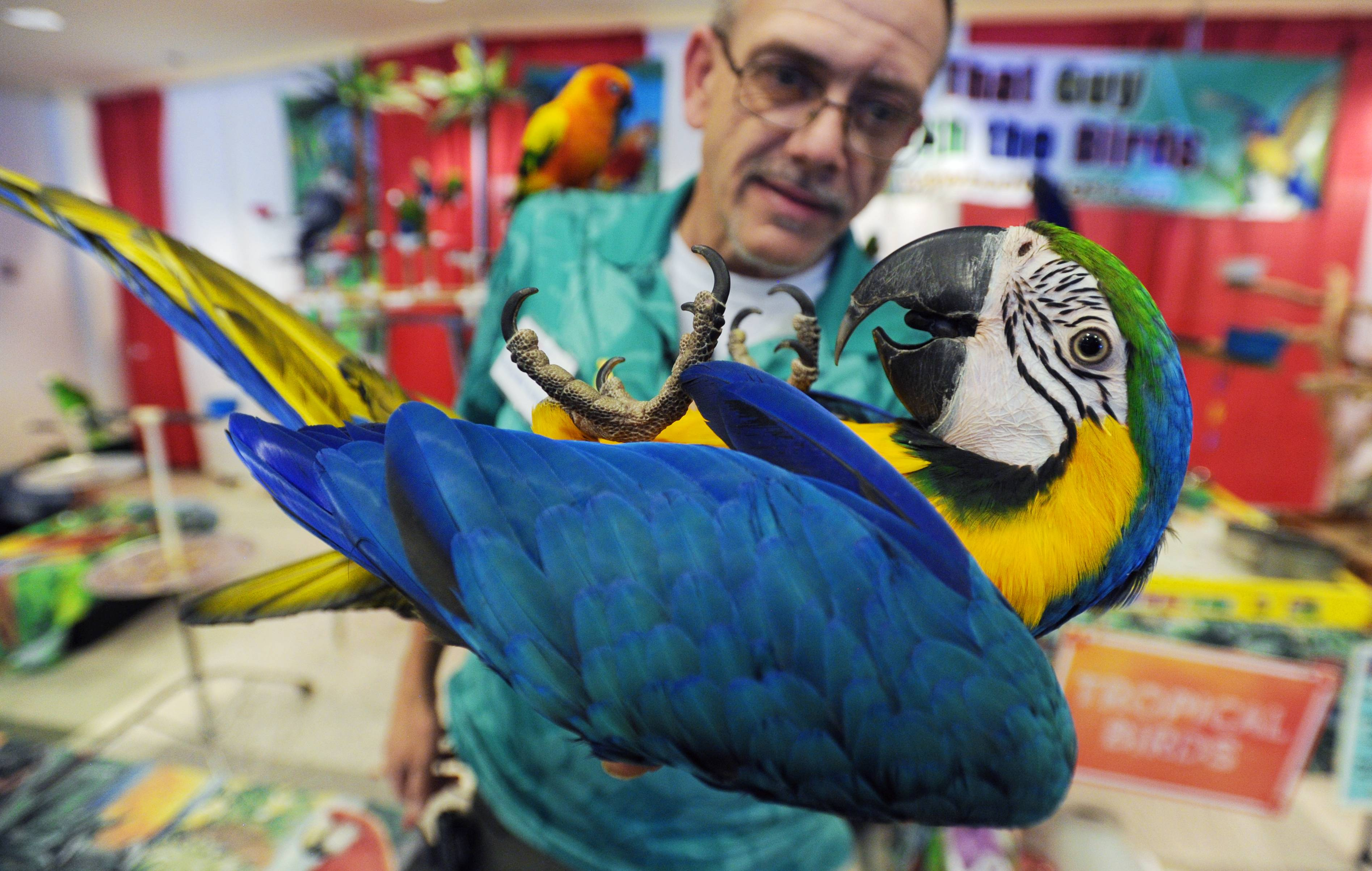 Indigo the exotic parrot does a trick for owner Kenny Sprouse of That Guy With The Birds Show on Friday at the Chicagoland Family Pet Expo at Arlington Park.