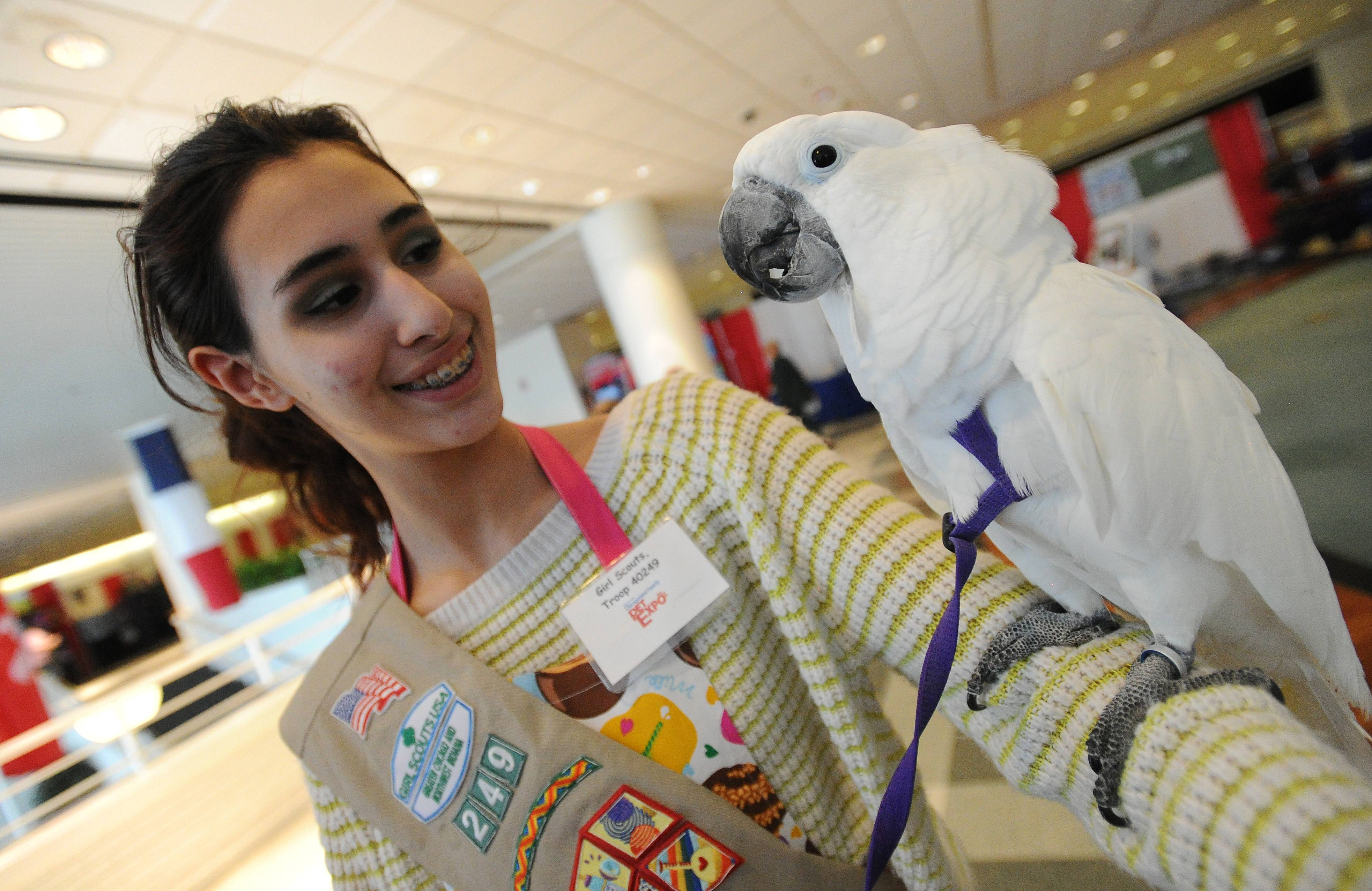 Cecelia Witkowski, 14, of Des Plaines delights in holding a parrot Friday at the Chicagoland Family Pet Expo.