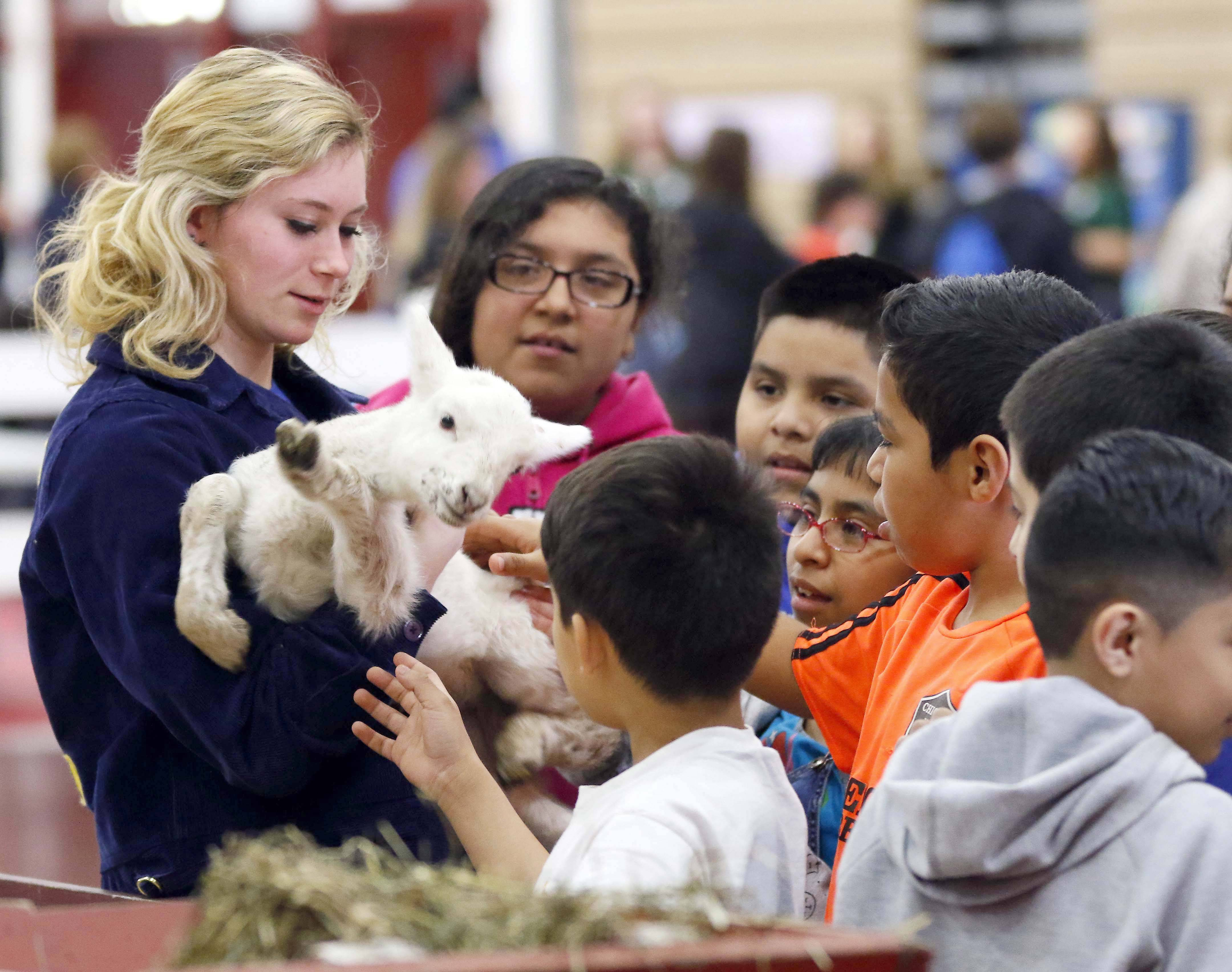 Jenna Harvell, 18, of Maple Park and Kaneland High School holds a three-day-old baby lamb for students from Hillcrest Elementary School in Elgin to see Tuesday. The Kane County Farm Bureau Ag Literacy Program brought fourth grade students and their teachers from Kane County elementary schools to Mooseheart to learn about agriculture. Students heard from farmers and presenters from many facets of the agriculture industry. Harvell said that she grew up on a farm and has been volunteering at this event for the last three years.