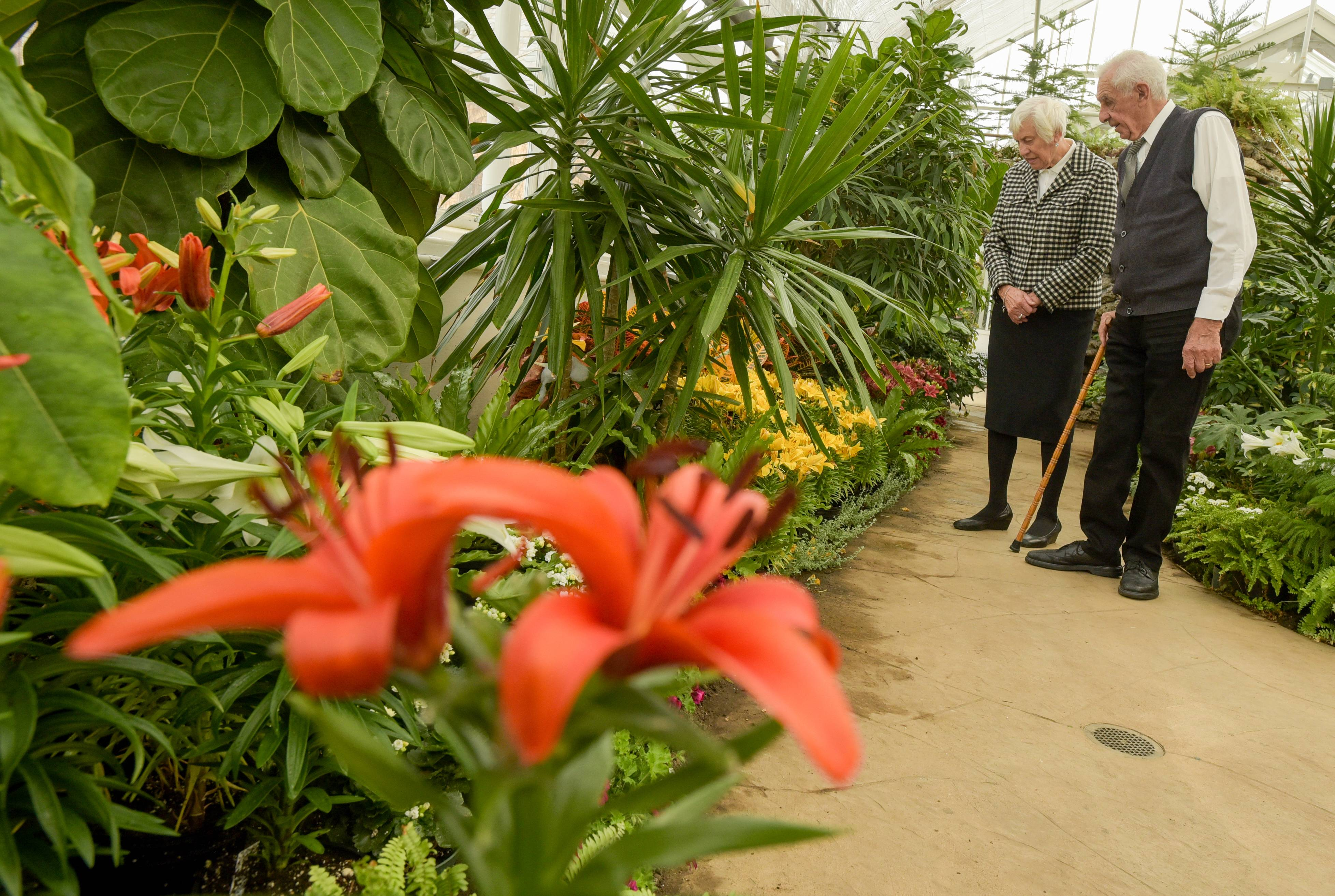 Maria and Max Bucher of Addison check out the flowers Sunday in the Elmhurst Park District's Wilder Park Conservatory. The conservatory's annual Spring Flower Show run opened this weekend and runs through the end of the month.