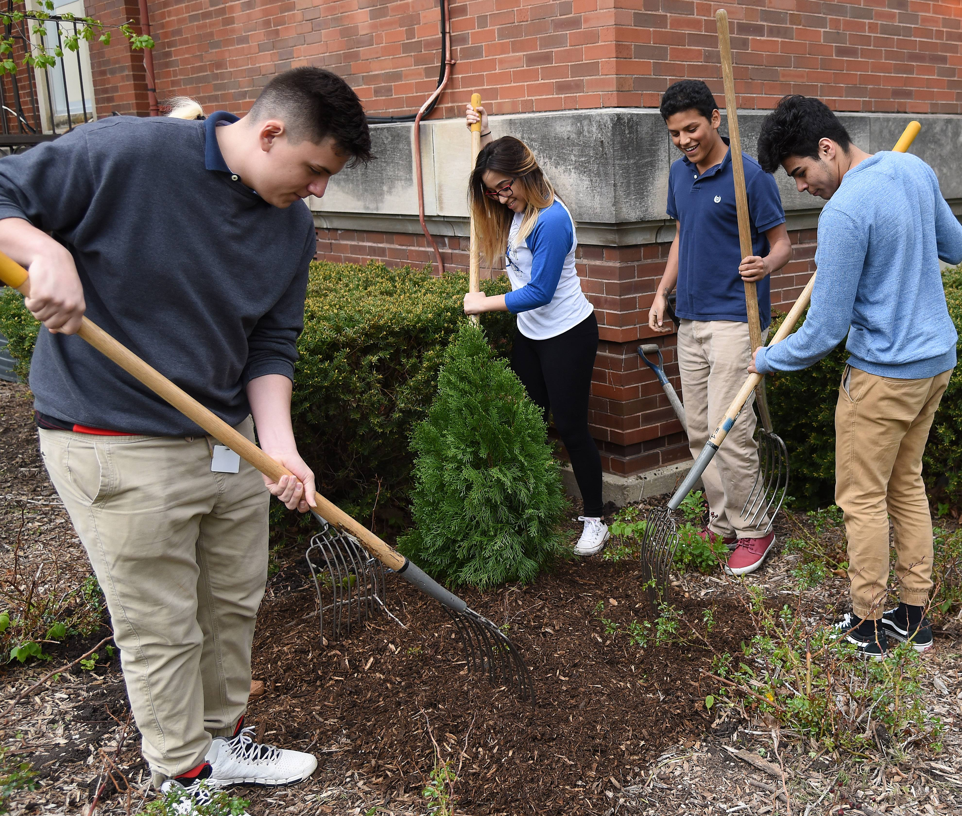 Science students from Elgin Area School District U-46's DREAM Academy on Gifford Street in Elgin plant an arborvitae at the school Friday in honor of Earth Day. Pictured, from left, are Alejandro Baez, Mariana Cintora, Christian Gallardo and Jose Chavez.