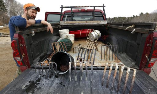 In this Tuesday, March 21, 2017 photo, Dan Harrington pauses at his truck after a day of scouting mudflats in search of bloodworm, in Freeport, Maine. Harrington digs for marine worms using rakes with tines of various lengths and widths, depending on the mud's firmness.