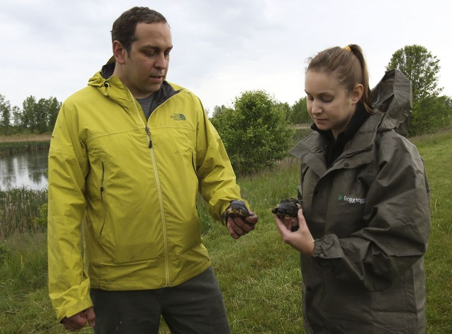 Joe Milanovich and Leigh Anne Harden compare a turtle released last year and one that was released Tuesday in DuPage County.