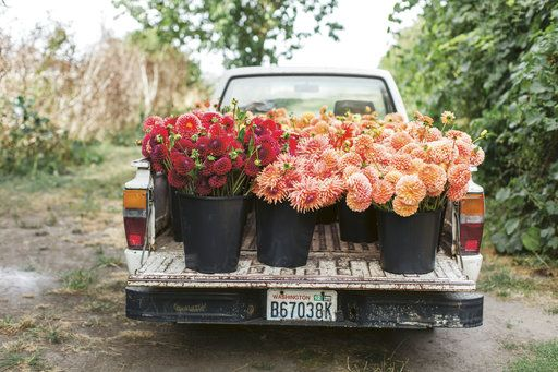 "This 2015 photo provided by Chronicle Books shows the farm truck at Erin Benzakein's Floret Farms loaded with a harvest of dahlias from the Floret field in Mount Vernon, Wash. The photo is featured in Benzakein's book, ""Floret Farm's Cut Flower Garden."" (Michele M. Waite/Chronicle Books via AP)"