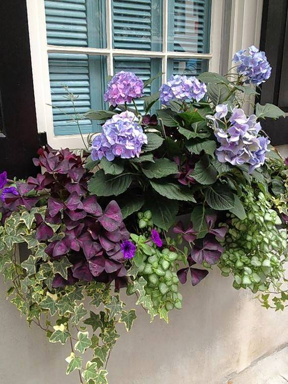 Get creative with your flowers by using a window box container. These beauties can be enjoyed from outside or inside your home. Check out the hydrangea sporting a bit of blue and pink.
