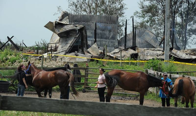 Horse Owners Tend To Some Of The 12 Horses That Survived A Barn Fire Early Wednesday
