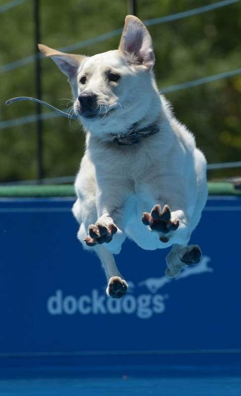 Libertyville Dog Days Of Summer