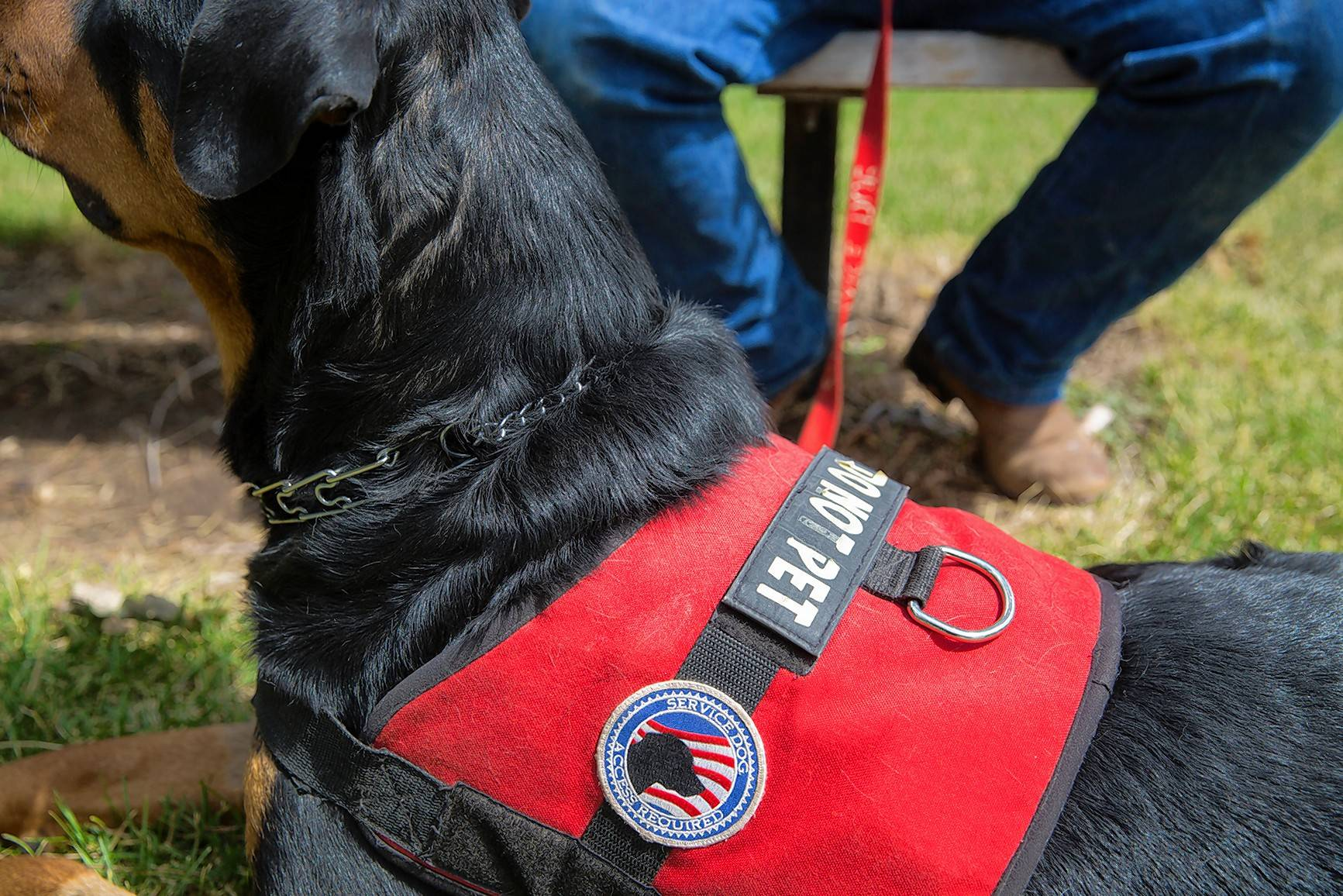 "This service dog isn't required to wear a vest or have any certification to be legally recognized under the Americans with Disabilities Act. The dog, named Apollo, helps his owner deal with post-traumatic stress disorder and wears a vest reading ""Do Not Pet."""