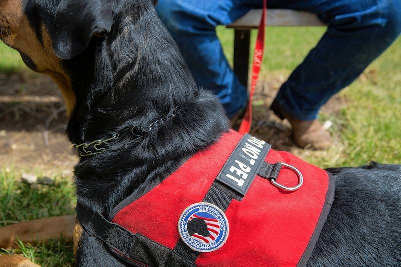 I Have Ptsd How Can I Get A Service Dog