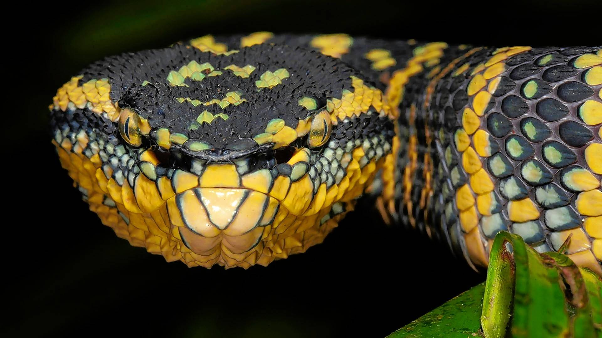 Snake venom could provide the blueprint for a new drug to prevent blood clots.