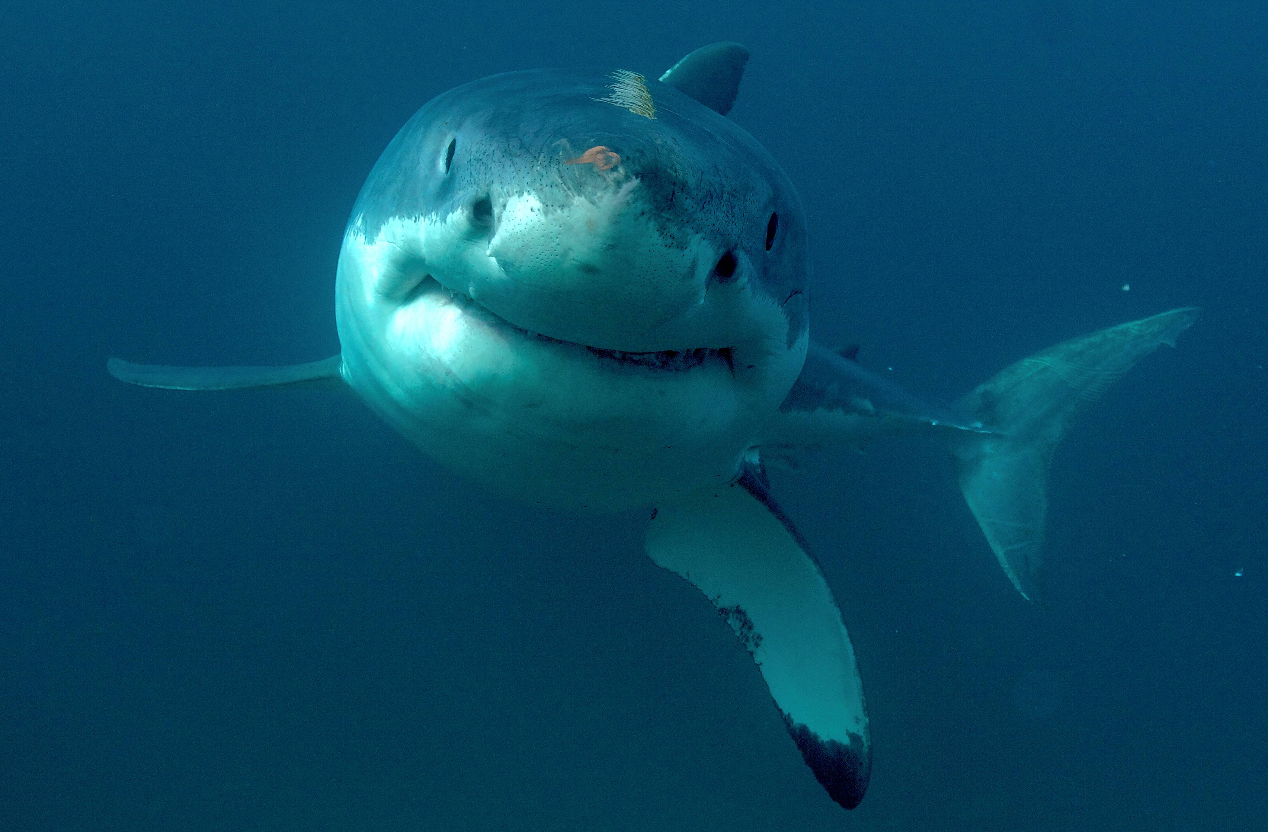 Discovery Channel kicks off its popular Shark Week Sunday, July 23.