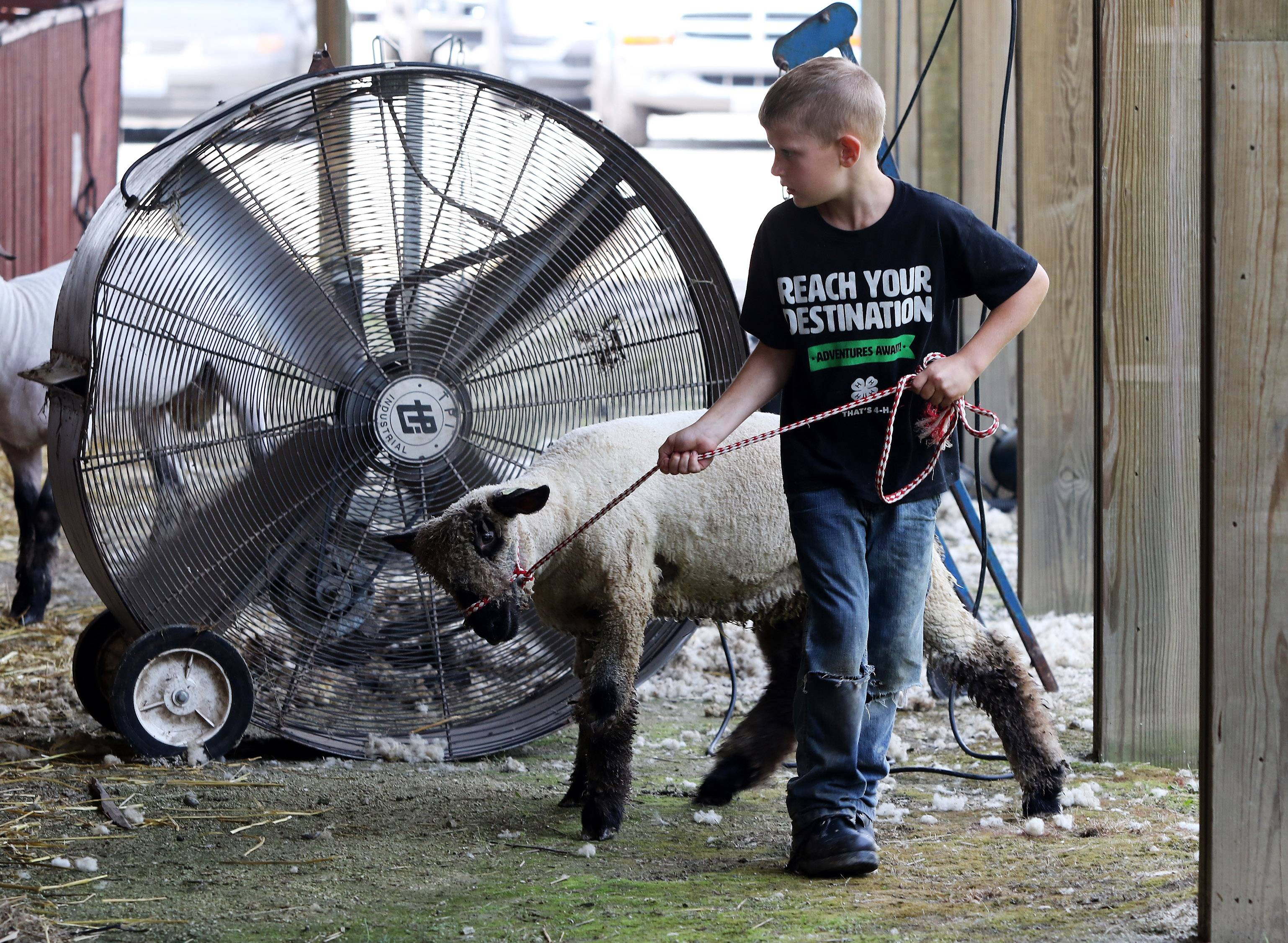 Caleb Linneman, 7, of Hebron, Ill. struggles with a ewe during the first day of the Lake County Fair on Wednesday at the Lake County Fairgrounds in Grayslake. The fair featured Banana Derby racing, Hambone Express Pig racing, motocross and the Miss Lake County Fair Pageant.