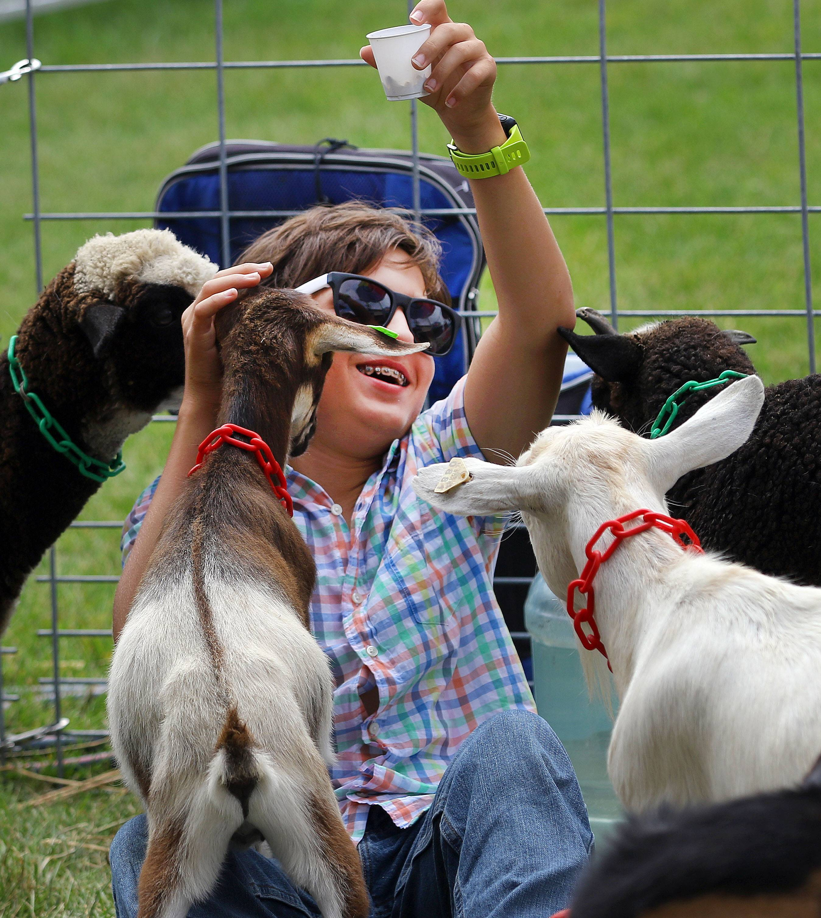 Sebastian Zimmer, 13, of Glenview is mobbed by baby goats in the petting zoo at the Lake County Fair Thursday in Grayslake.