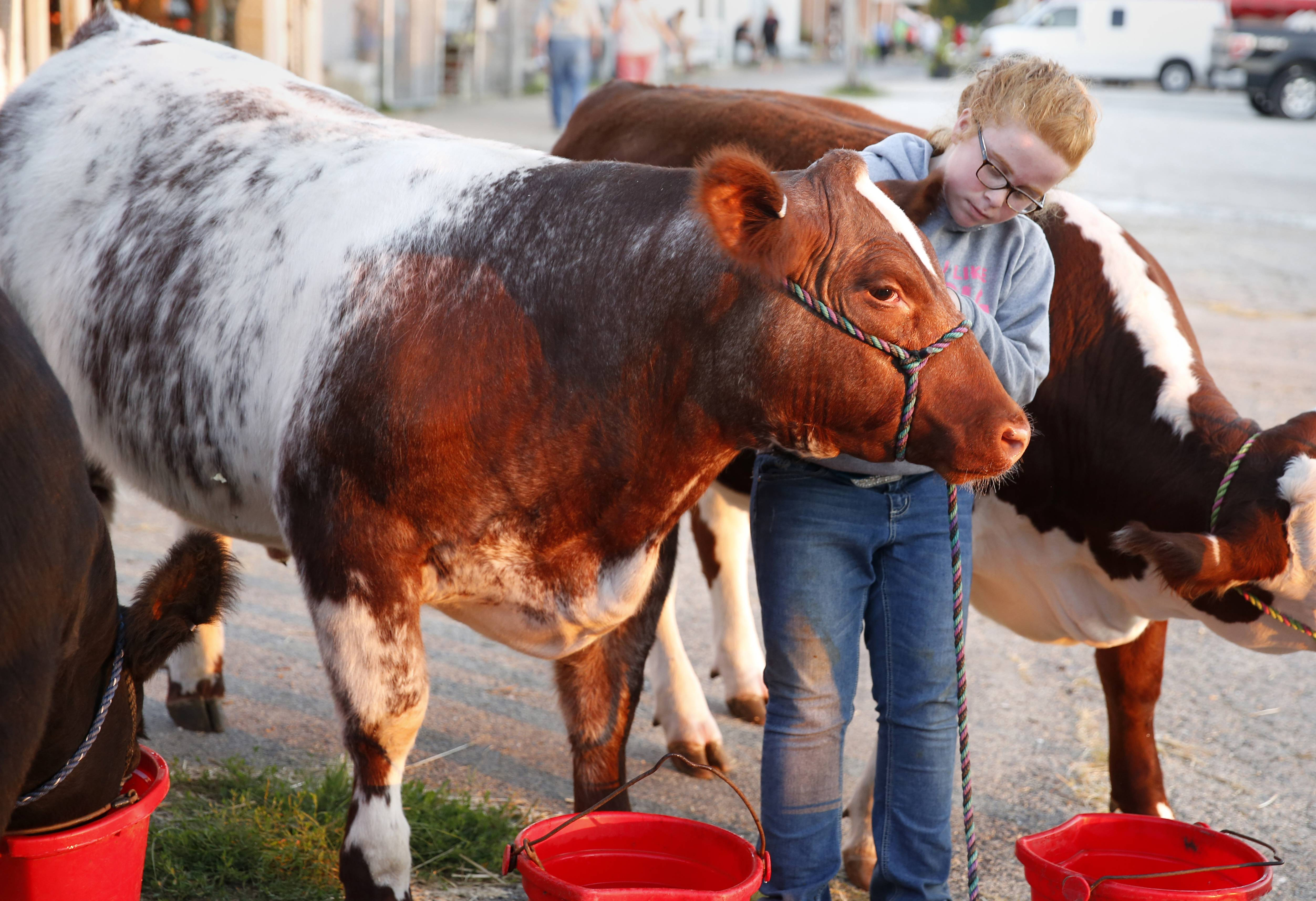 DuPage County Fair organizers say barns were packed with show animals. Brooklynn Hulmes of Lee, Illinois, entered her steers in the competitions.