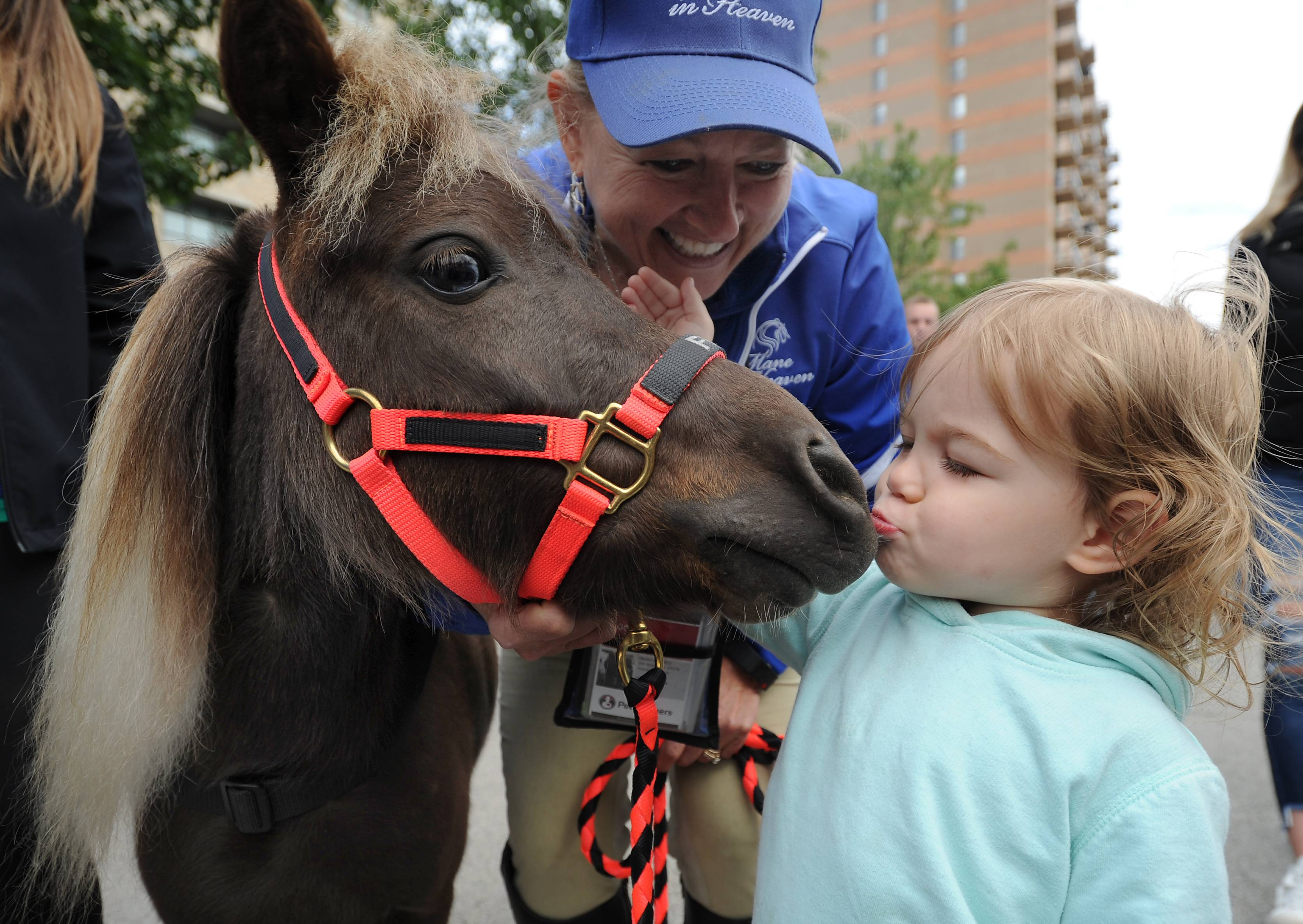 Evelaine Reedy, 2, of Rolling Meadows gives a little smoochy to Faith the Miniature Therapy Horse as owner Jodie Diegel of Barrington looks on at Mane Event Block Party in downtown Arlington Heights.