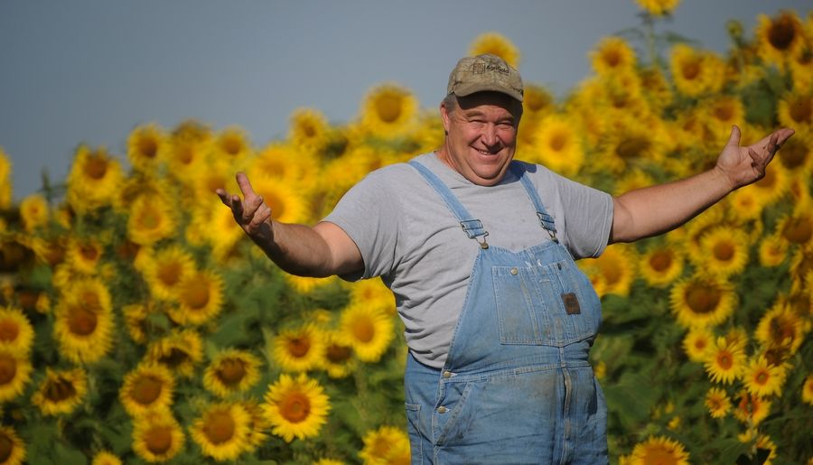 Russ Grollemond of Sycamore stands near one of two new sunflower fields at Barrington Hills Farm in Barrington Hills.
