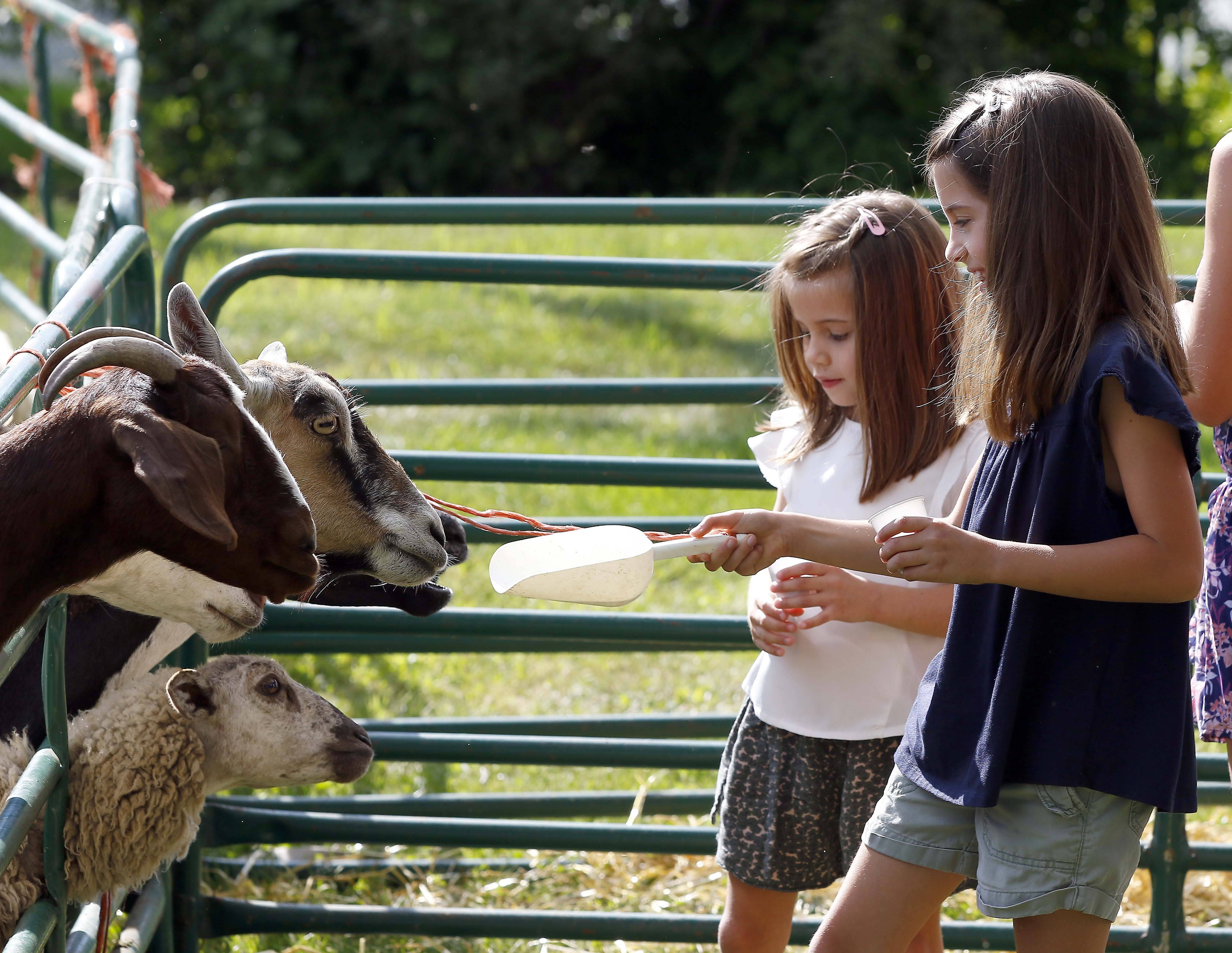Sisters Ava, left, and Frankie Sillitoe of Geneva feed animals at the petting zoo Saturday during the Wayne Wine & Horse Fest at Dunham Woods Riding Club. There was music, food, kids activities, horses and wine, all benefiting the police department.