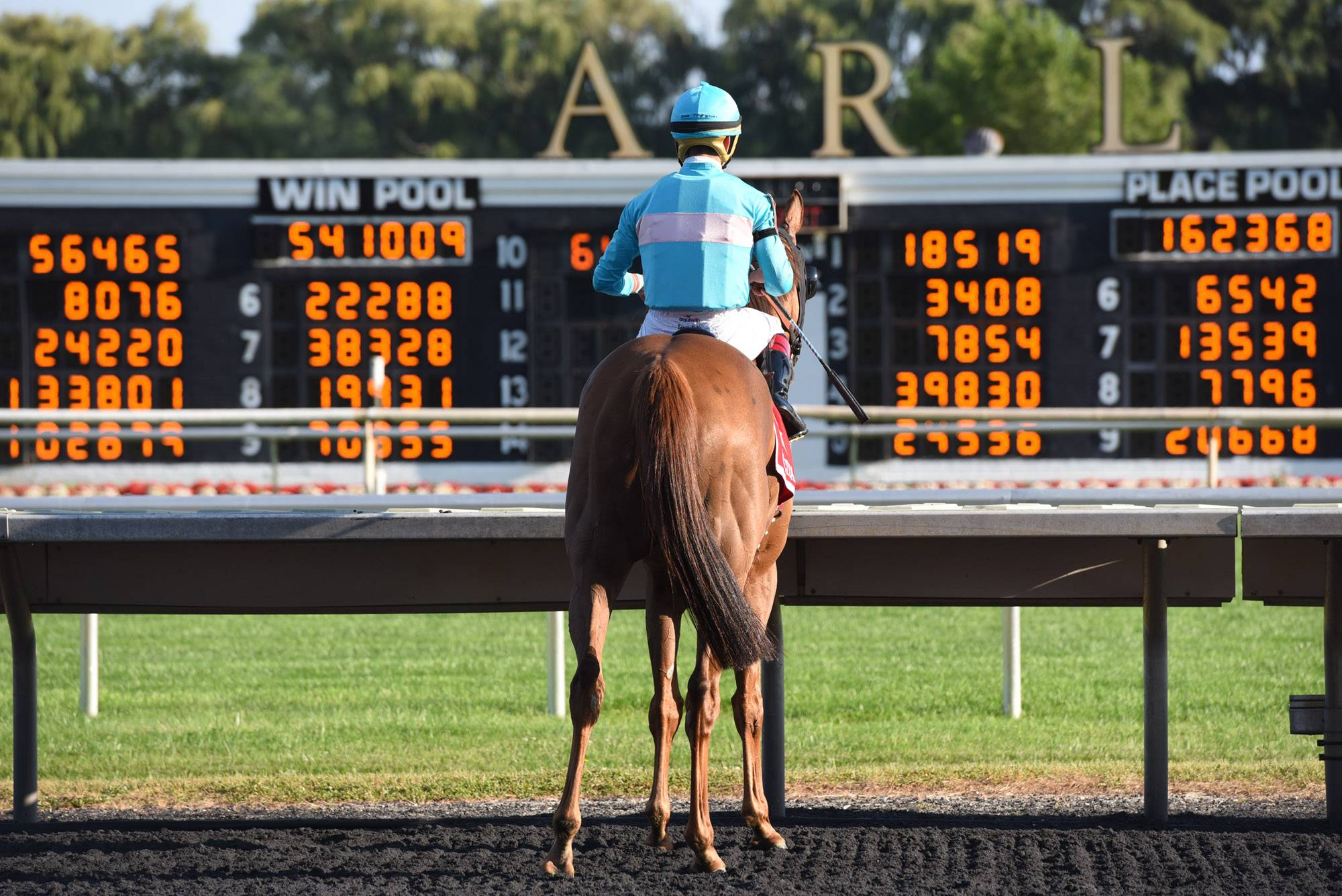 John Starks/jstarks@dailyherald.comJockey Irod Ortiz, Jr. sits on Dacita and looks at the results of The Beverly D. after his win in the $600,000 stakes race at the Arlington International Racecourse in Arlington Heights Saturday.
