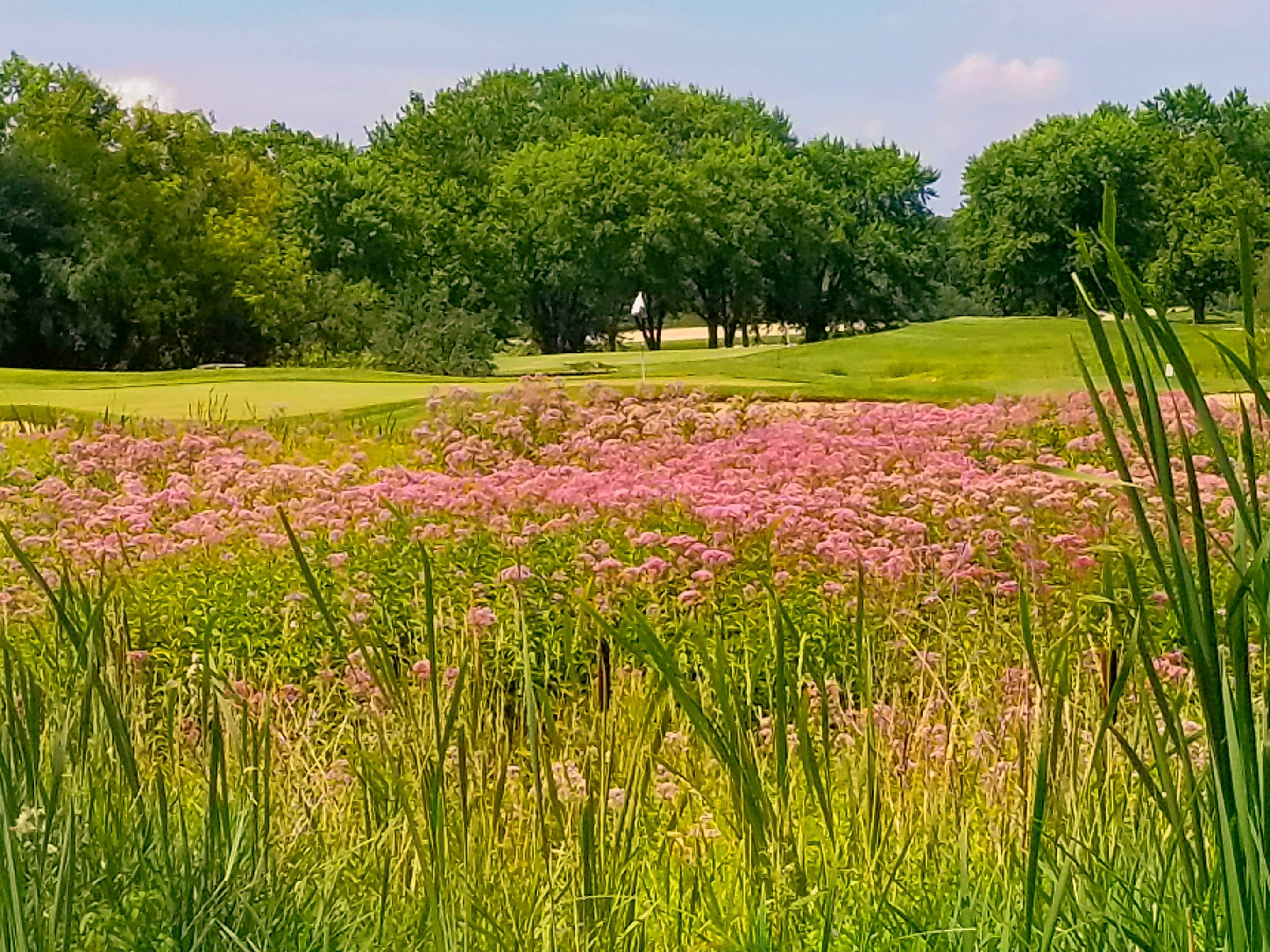 Fescue fields, created by architect Bob Cupp, greatly enhanced the renovated Highlands course.