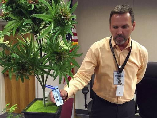 FILE--In this May 15, 2016 file photo, Todd Golden displays a sample tag which can be scanned by radio-frequency identification devices, on an artificial marijuana plant at the Oregon Liquor Commission offices in Portland, Ore. Two reports say Oregon is an epicenter of marijuana production, with cannabis being smuggled across the USA. Oregon and other legalized states are trying to curtail this diversion into the black market, as the federal government considers more aggressive enforcement in those states. (AP Photo/Andrew Selsky, file)