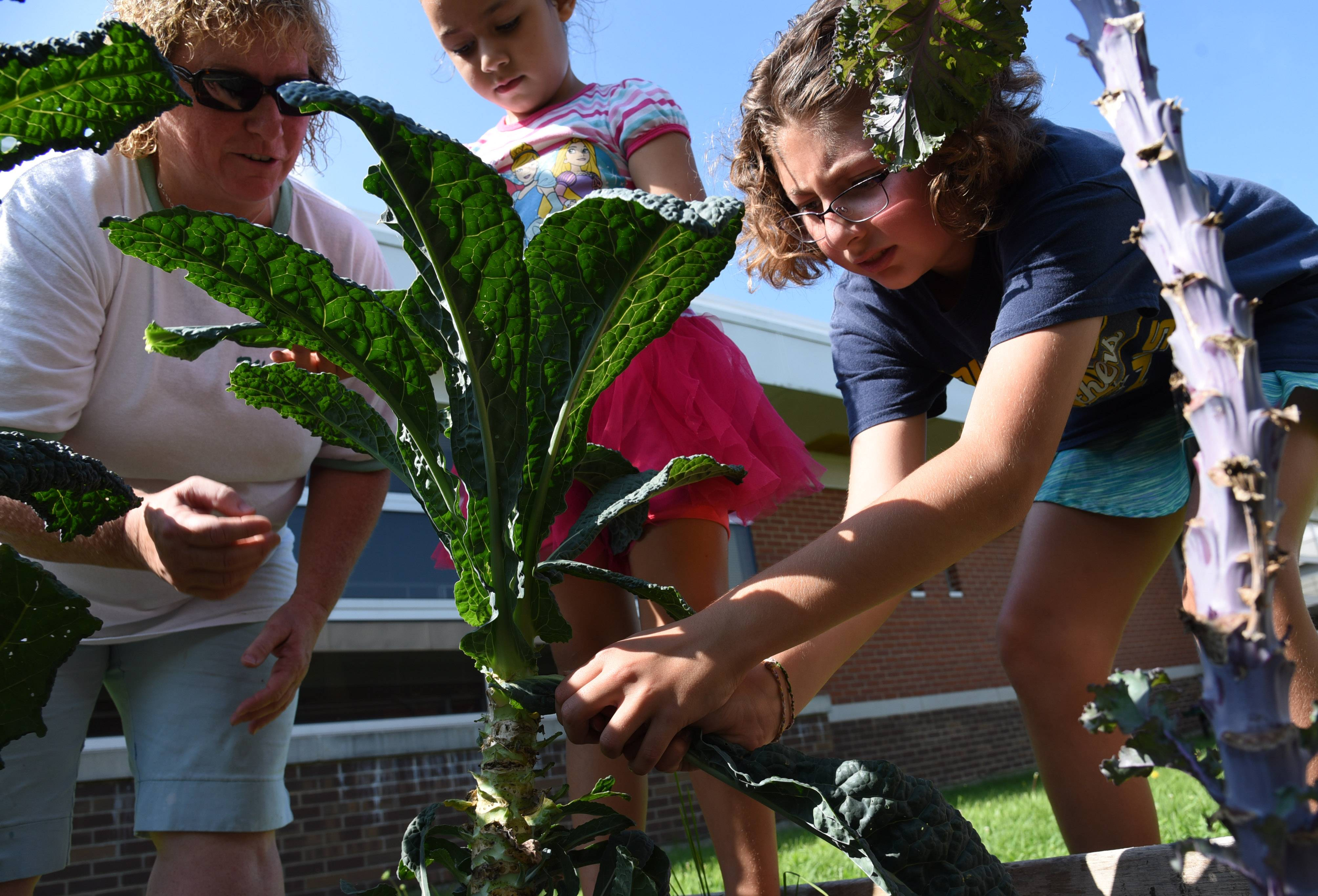 Lori Northup, Fremont Elementary School's healthy minds teacher, left, helps students Madisun Flores and Tessa Davis, right, pick kale Tuesday at the school's gardens in Mundelein.