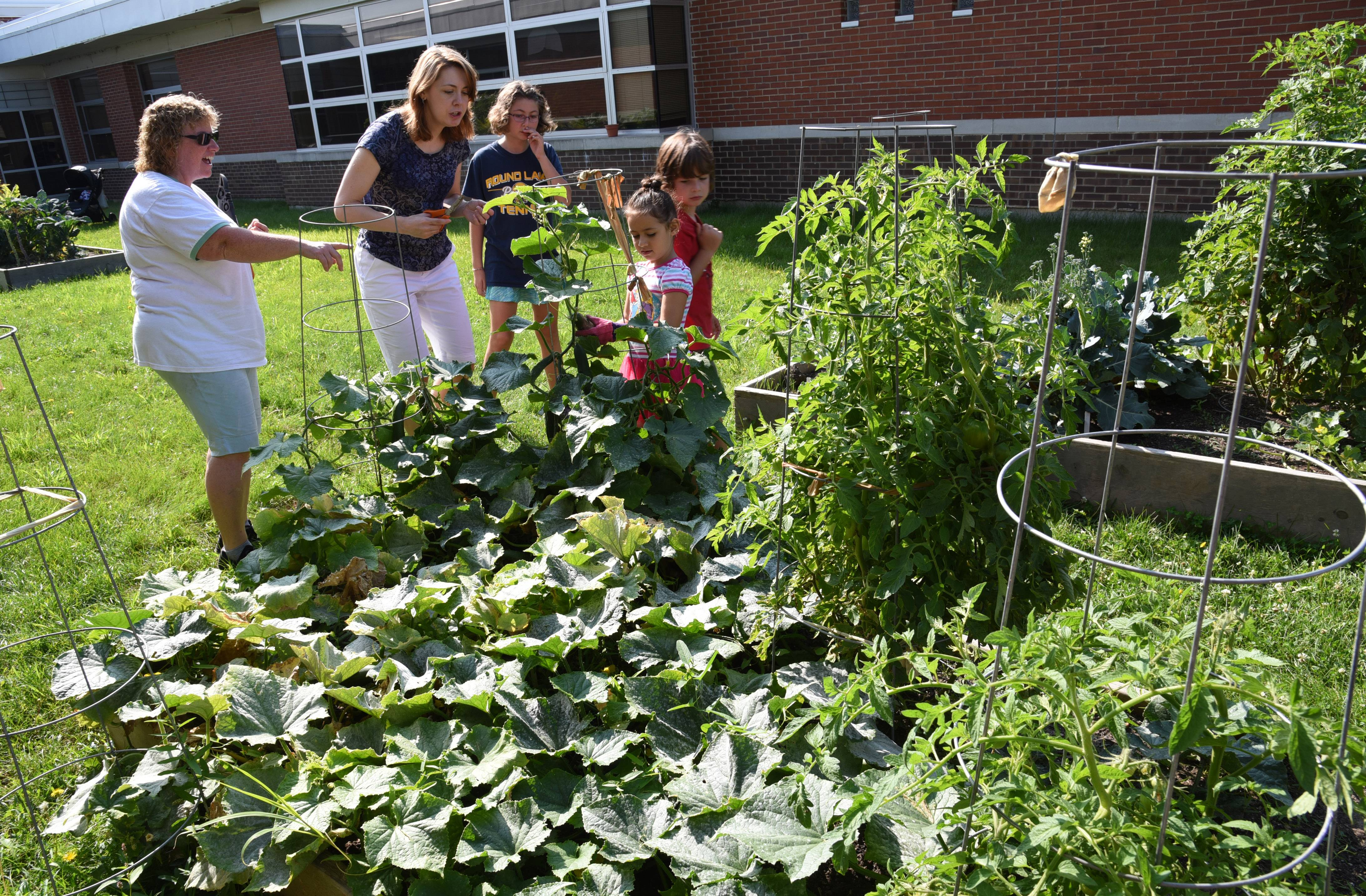 Lori Northup, Fremont Elementary School's healthy minds teacher, left, gets harvesting help from parent Anne Davis, left, and students Tessa Davis, Madisun Flores and Lee Davis at the school's gardens Tuesday in Mundelein.