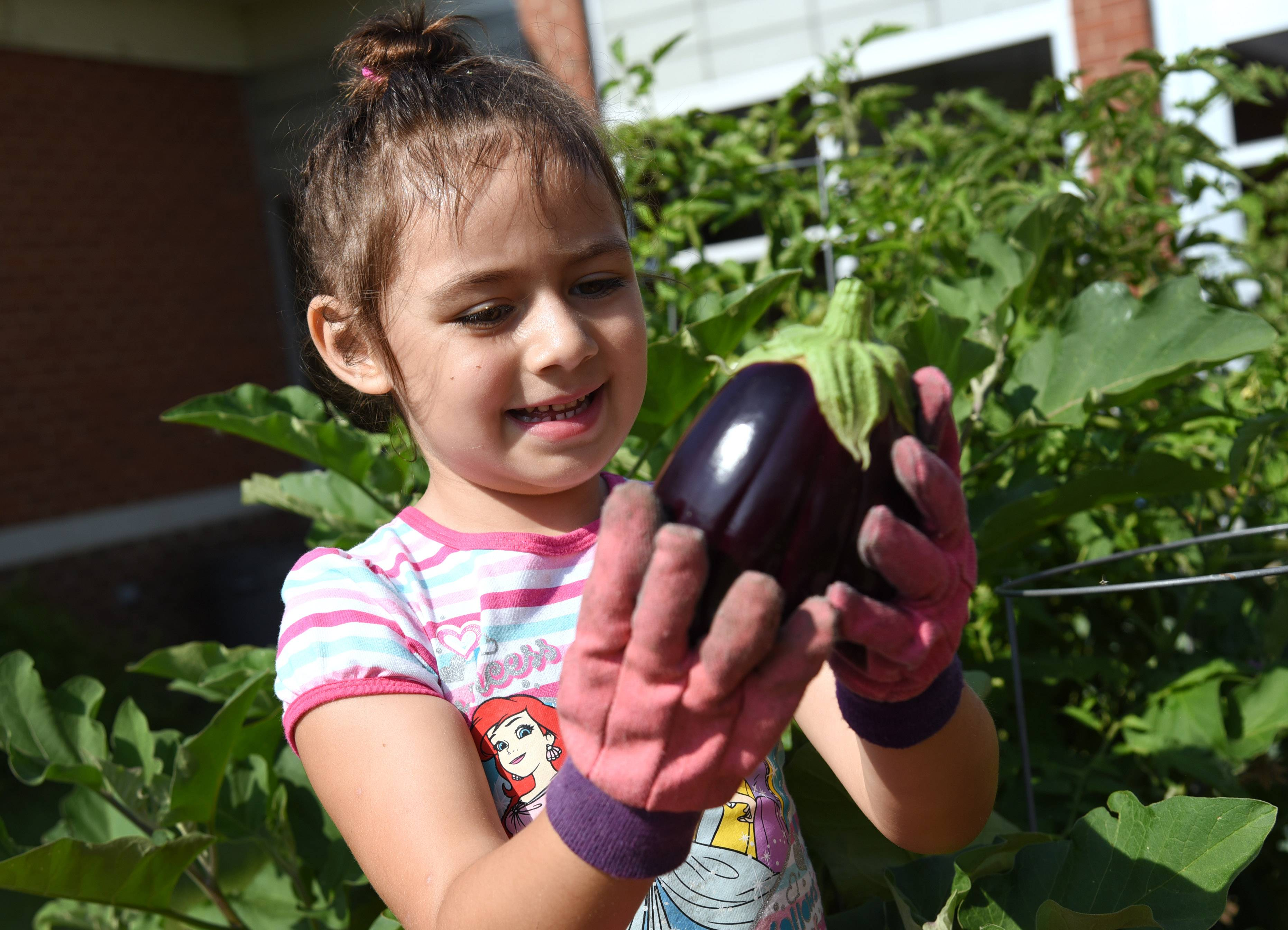 Fremont Elementary School kindergarten student Madisun Flores checks out an eggplant she helped harvest Tuesday at the Mundelein school.
