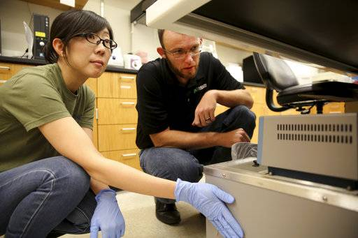 Lab manager Jonathan King, right, and postdoctoral student Miko Takahashi, left, prepare to run a DNA test at the Center for Human Identification research and development lab at the University of North Texas on Monday, July 31, 2017, in Fort Worth, Texas. The university's case lab, which tests DNA for missing people and unidentified dead, has temporarily stopped accepting samples outside Texas after the National Institute of Justice opted not to offer millions of dollars in grants for DNA technology to identify missing people.