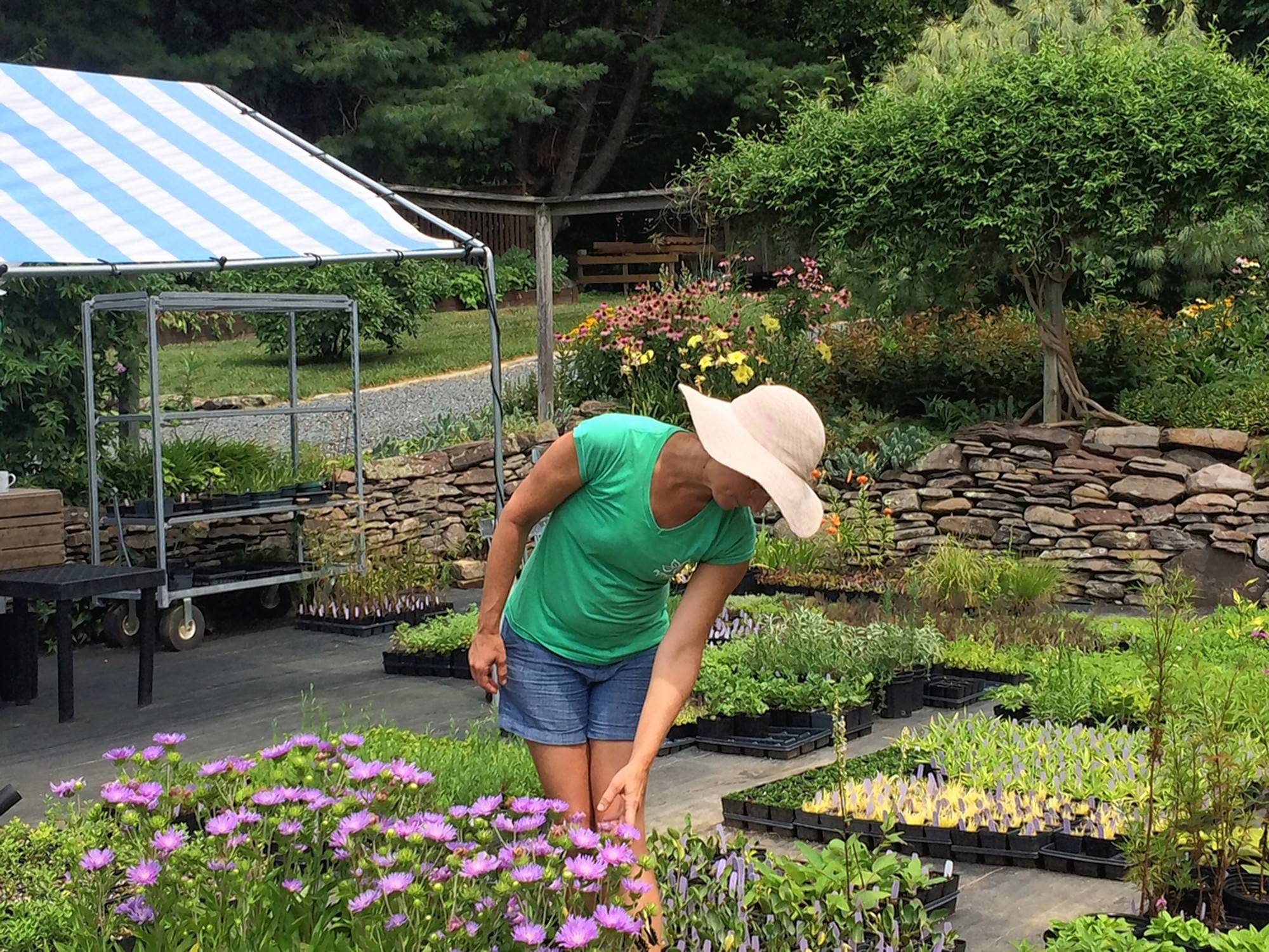 Melanie Ruckle at her Putnam Hill Nursery in Forest Hill, Maryland.