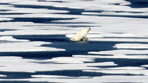 A polar bear steps out of a pool while walking on the ice in the Franklin Strait in the Canadian Arctic Archipelago, Saturday, July 22, 2017. Industry experts, researchers and veterans of the Far North say there remain many obstacles to reaping the riches once blocked by the ice. Conservationists also oppose the large-scale extraction of Arctic resources, fearing that the fragile environment will be irreparably harmed. (AP Photo/David Goldman)
