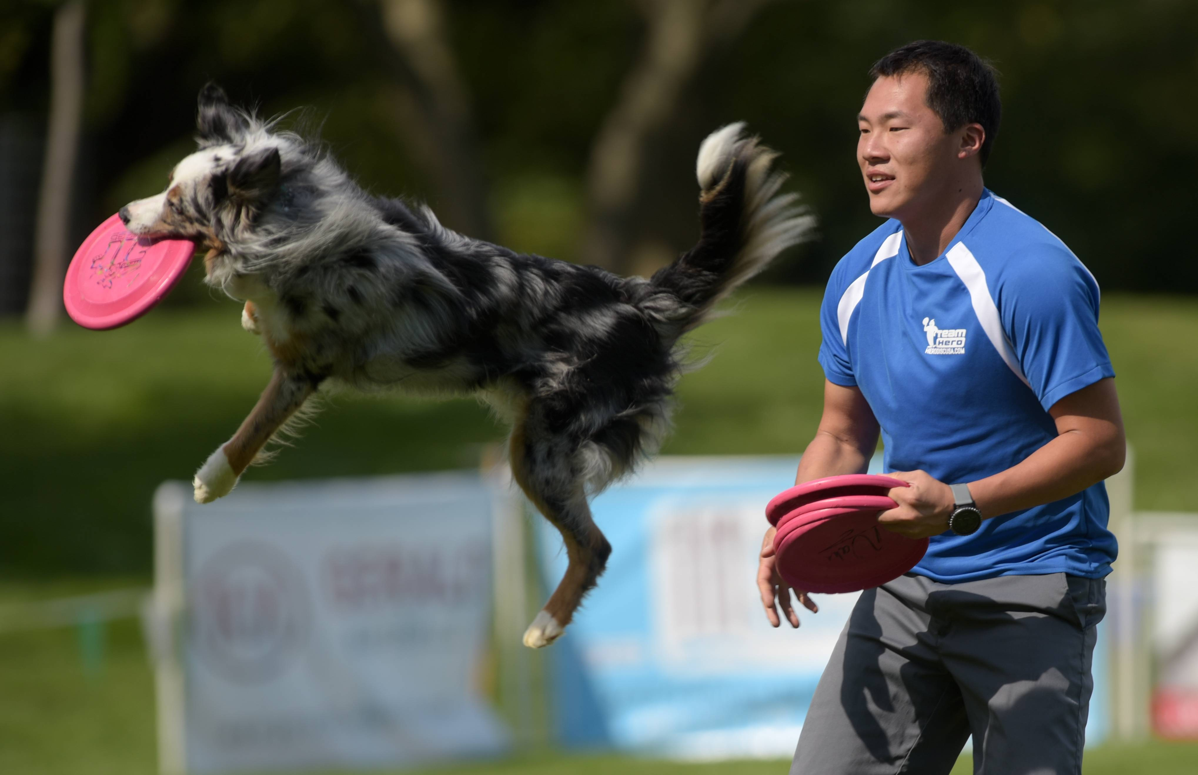 The Ashley Whippet K9 Frisbee World Championships return to Naperville Saturday and Sunday, Sept. 2 and 3, but at a new location — the Nike Sports Complex.