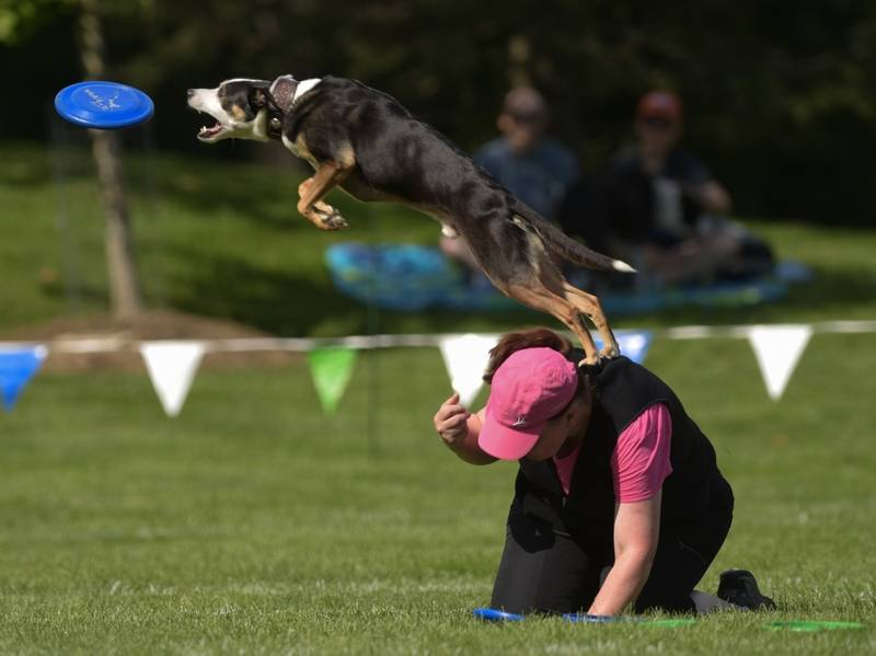 K9 Frisbee World Championships returning to Naperville