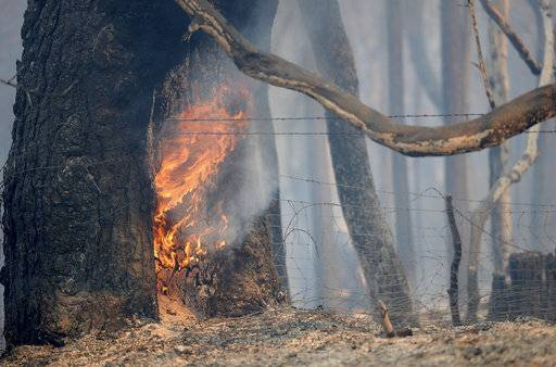 A tree continues to burn from a wildfire along Lumpkin Road near Oroville, Calif., Wednesday, Aug. 30, 2017. The wildfire is among a series of wildfires burning across the U.S. West. (Bill Husa/Chico Enterprise-Record via AP)