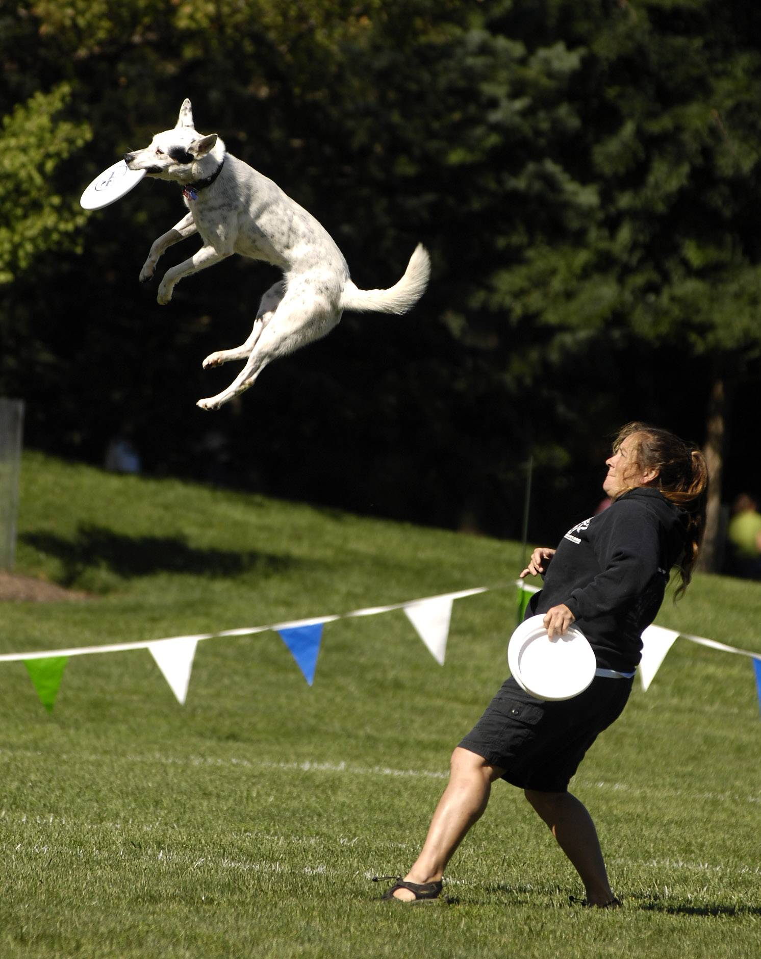 Tracy Custer and her dog Chill, of St. Louis, MO, competed in a previous year of the Ashley Whippet K-9 Frisbee® World Championships.
