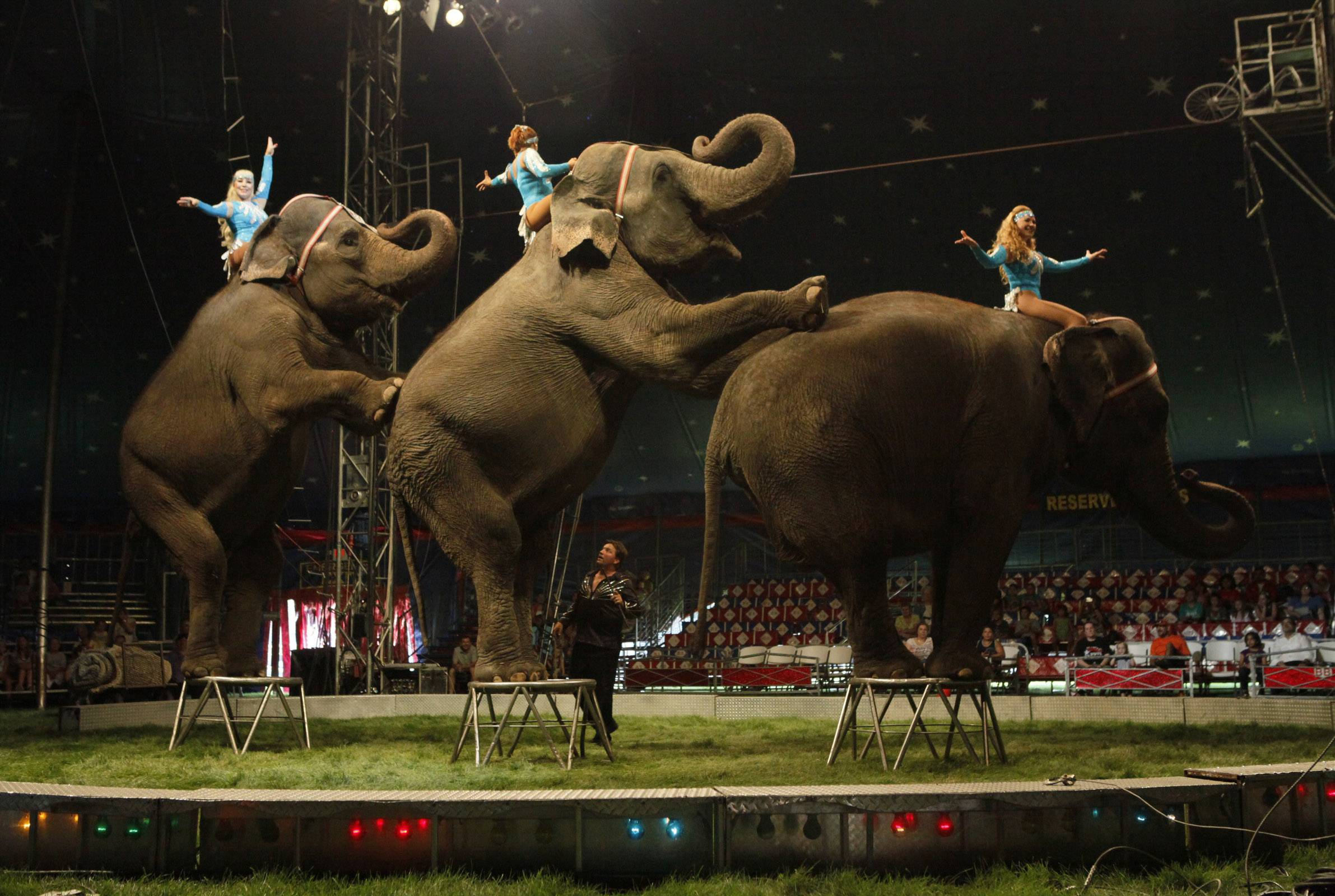 Will the show go on after Illinois bans circus elephants?