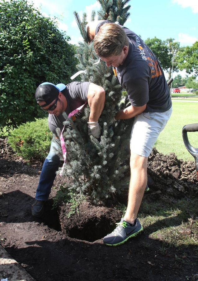 Consultant Matt Biasella of Youngstown, Ohio, left, and Ryan Frew of Lake Zurich plant an evergreen bush at Lambs Farm.