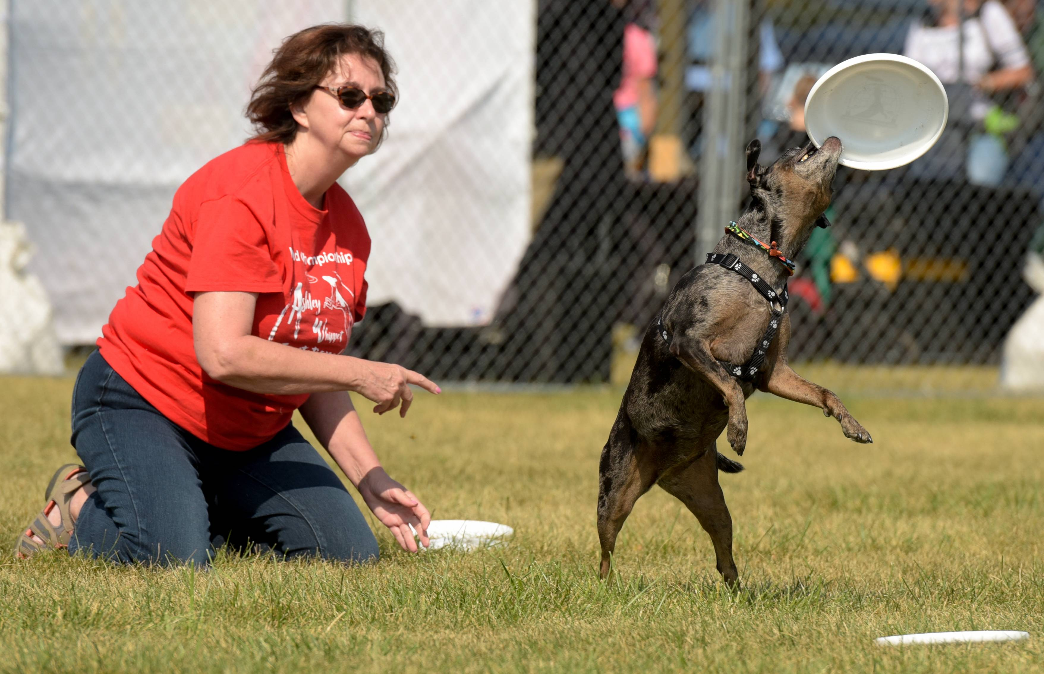 Chris Wehrli and her dog Mocha Latte from Skydogs in Naperville perform for visitors to the annual CSBarks dog festival Sunday in Carol Stream.