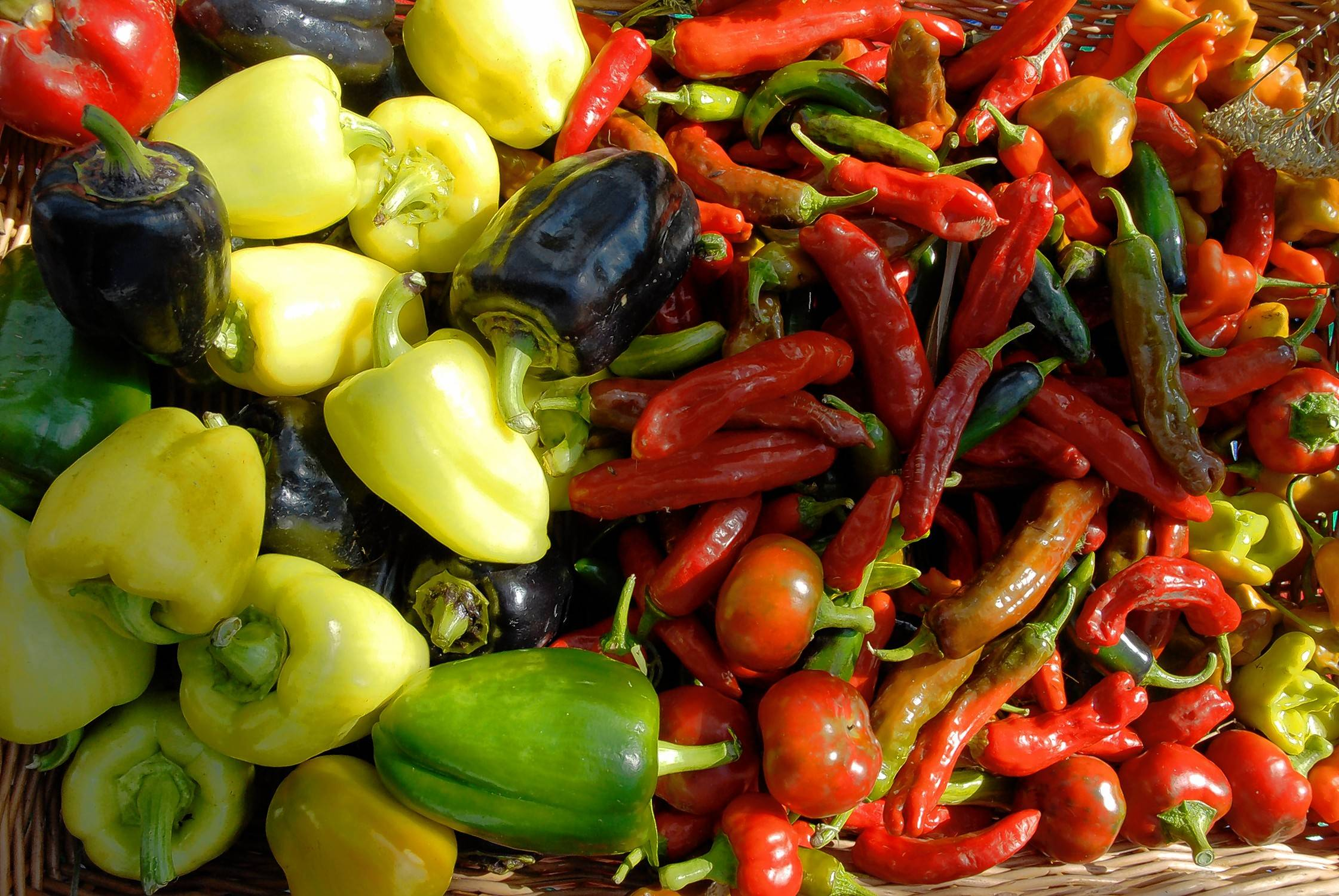 Warm-season crops like peppers and tomatoes should be picked as soon as possible.
