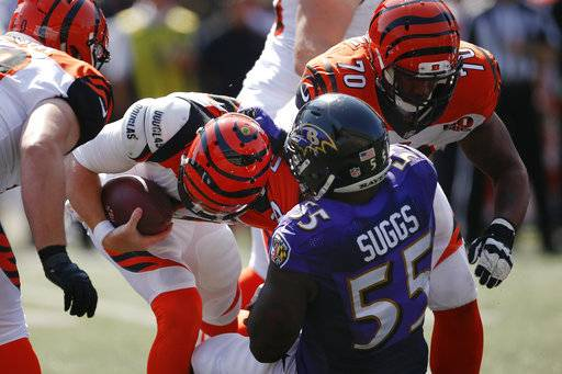 Baltimore Ravens outside linebacker Terrell Suggs (55) sacked Cincinnati Bengals quarterback Andy Dalton, center left, in the second half of an NFL football game, Sunday, Sept. 10, 2017, in Cincinnati. (AP Photo/Gary Landers)