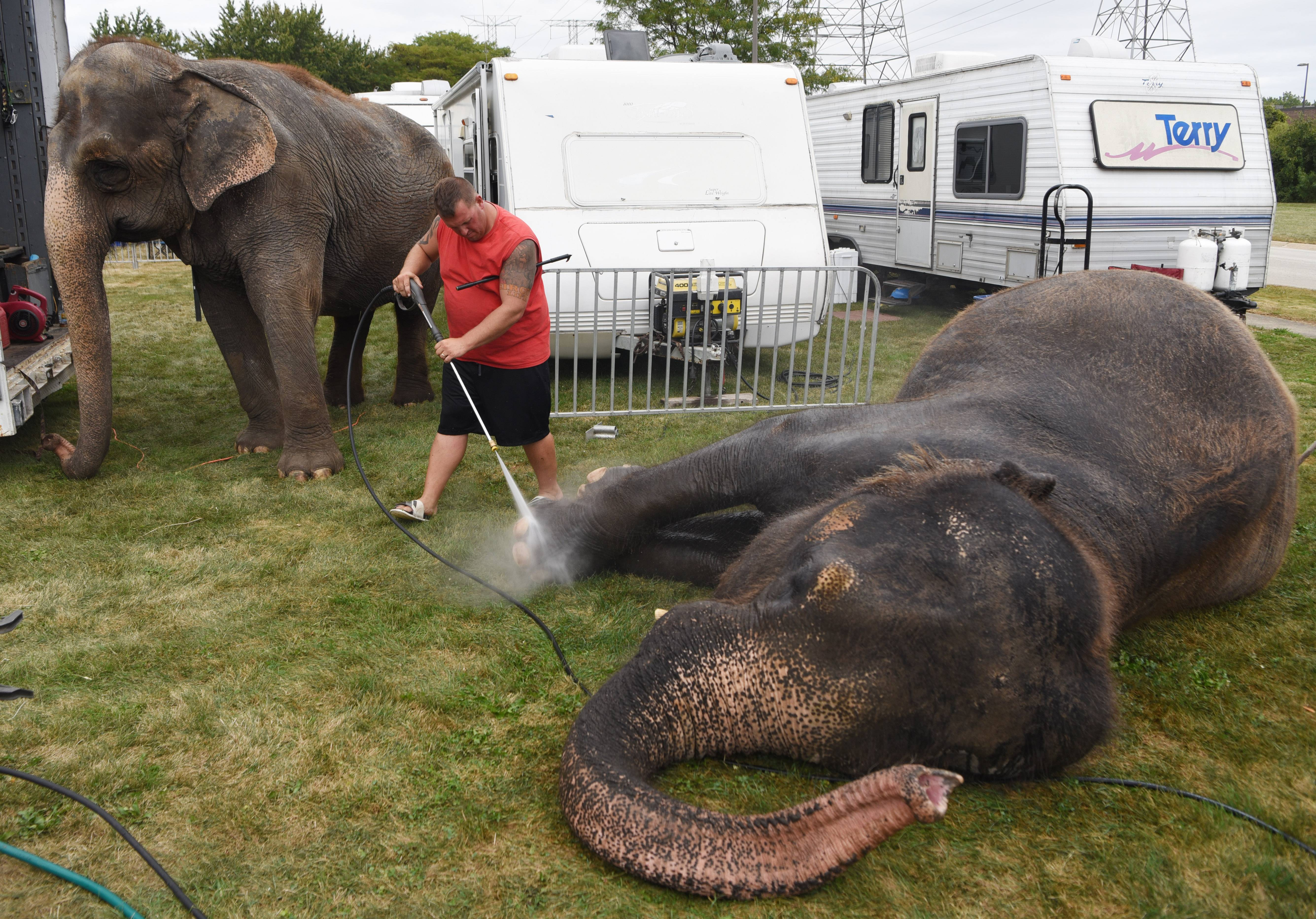 Elephant trainer Joey Frisco washes Cindy, right, while Jenny waits her turn prior to performances by The Kelly Miller Circus in Elk Grove Village Wednesday. The circus runs through Thursday.