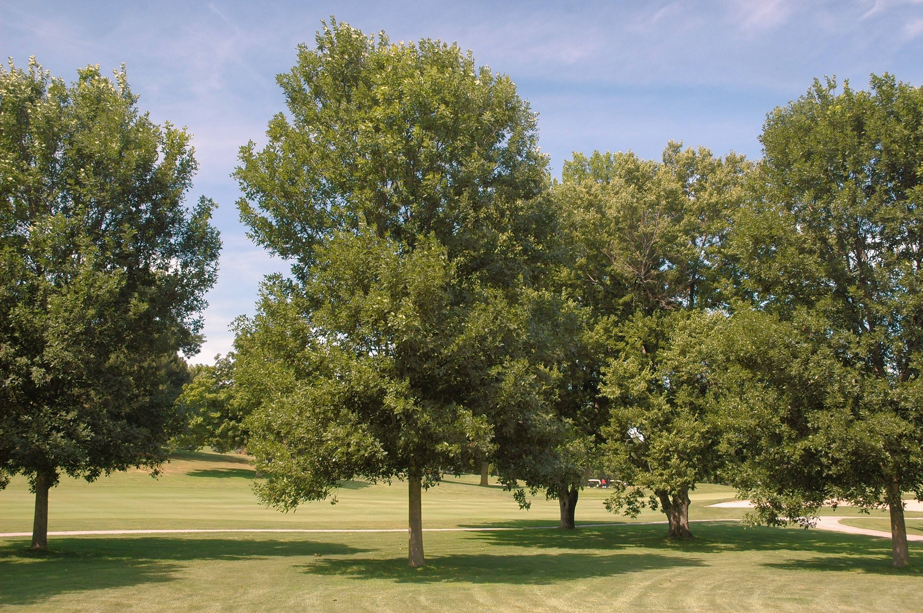 Report: Ash trees on the brink of extinction