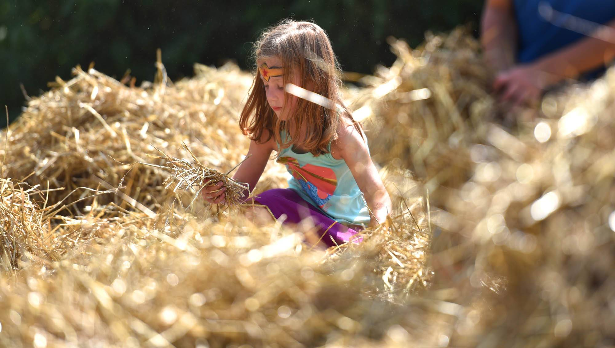 Lola Todd, 5, of West Dundee digs through a yard full of straw in search of coins Saturday at the Heritage Fest in West Dundee.