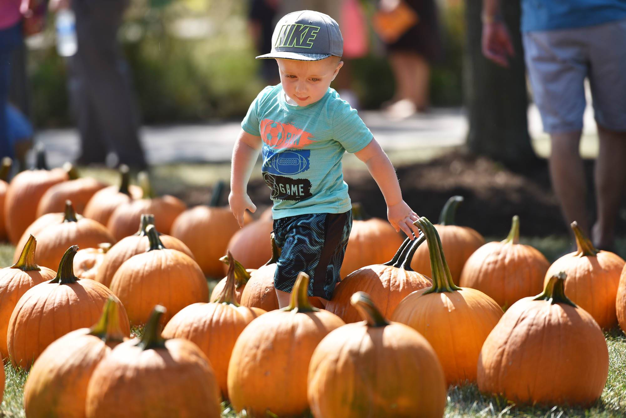 Grayson Goudzwaard, 2, goes in search of the best pumpkin Saturday at the Autumn Fair at Peck Farm Park in Geneva. He was with his mother, Amanda, from Naperville.