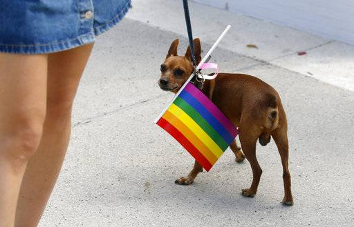 "A girl leads a dog during gay pride march in Belgrade, Serbia, Sunday, Sept. 17, 2017. Holding rainbow flags, balloons and a banner reading ""For change,"" pride participants gathered in Belgrade, the Serbian capital, before setting off on a march through the city. (AP Photo/Darko Vojinovic)"