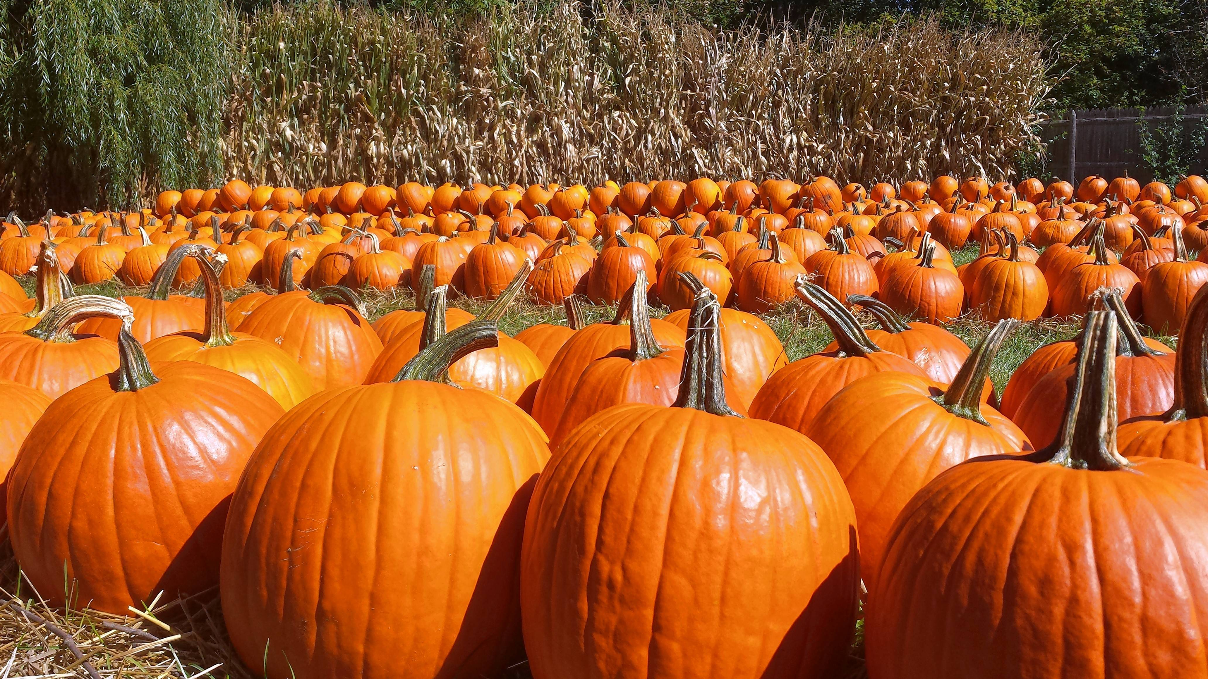 11 Local Pumpkin Patches Worth A Visit This Fall