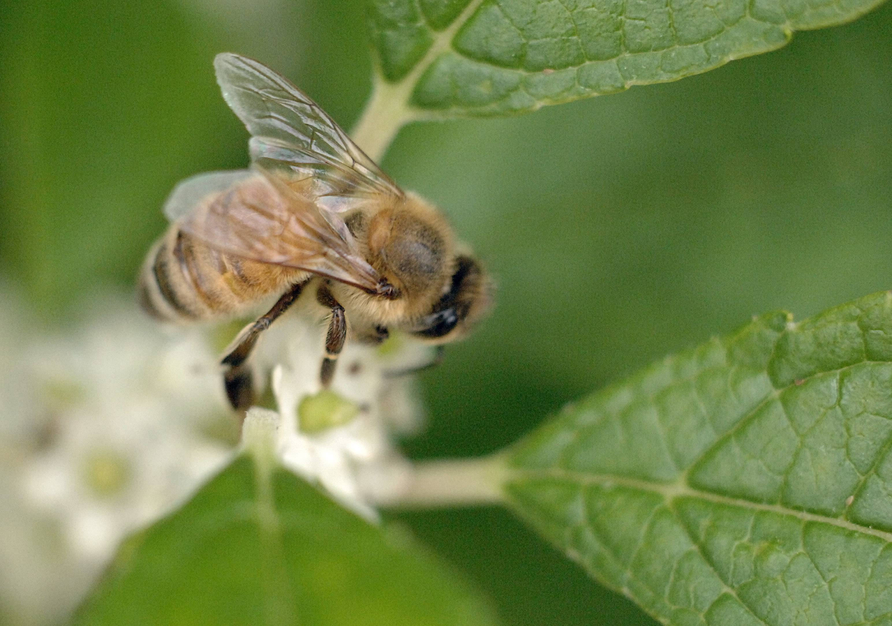 Beekeeping could be come to Elgin next year