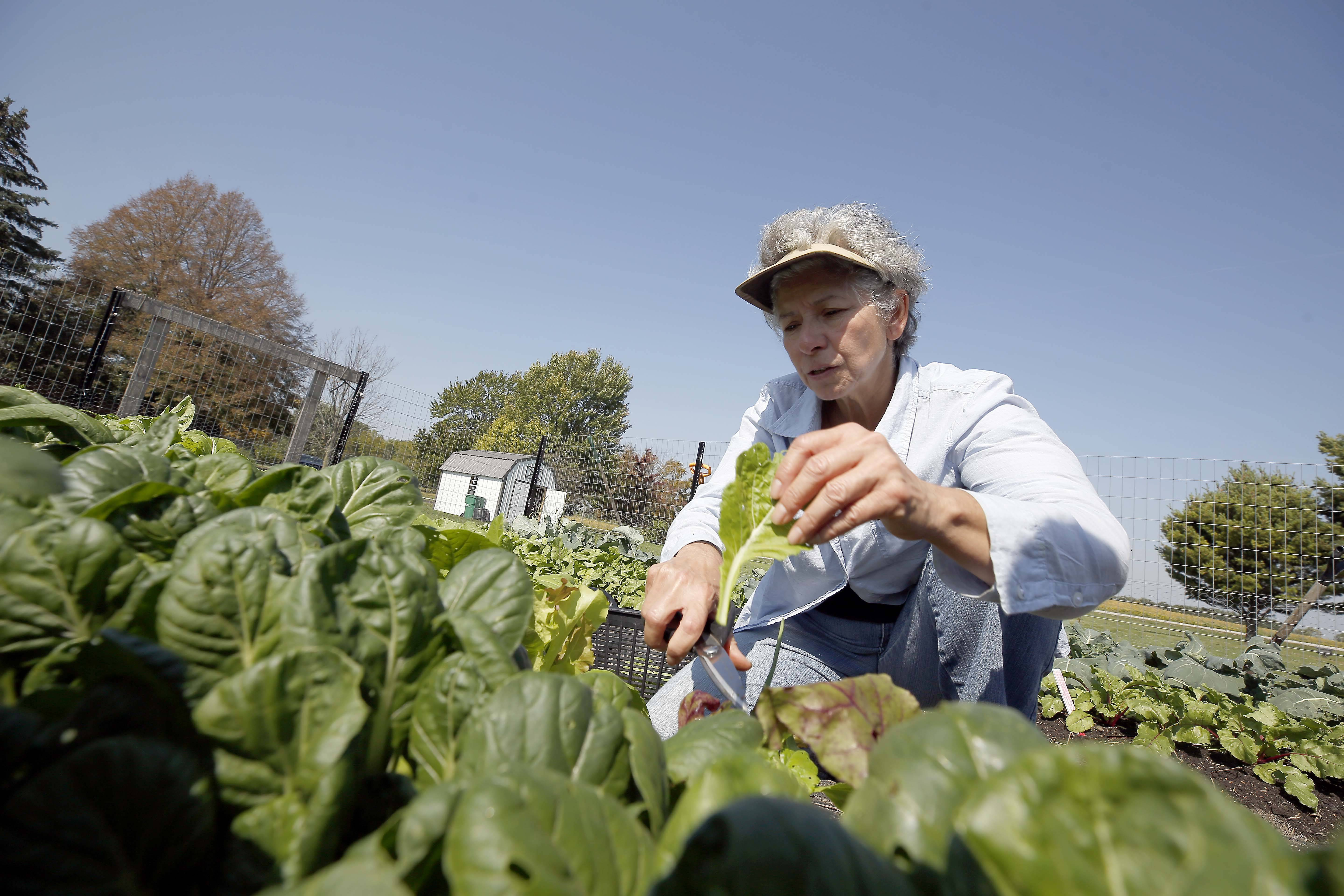 'Farm to Table' dinner to benefit Elgin food co-op