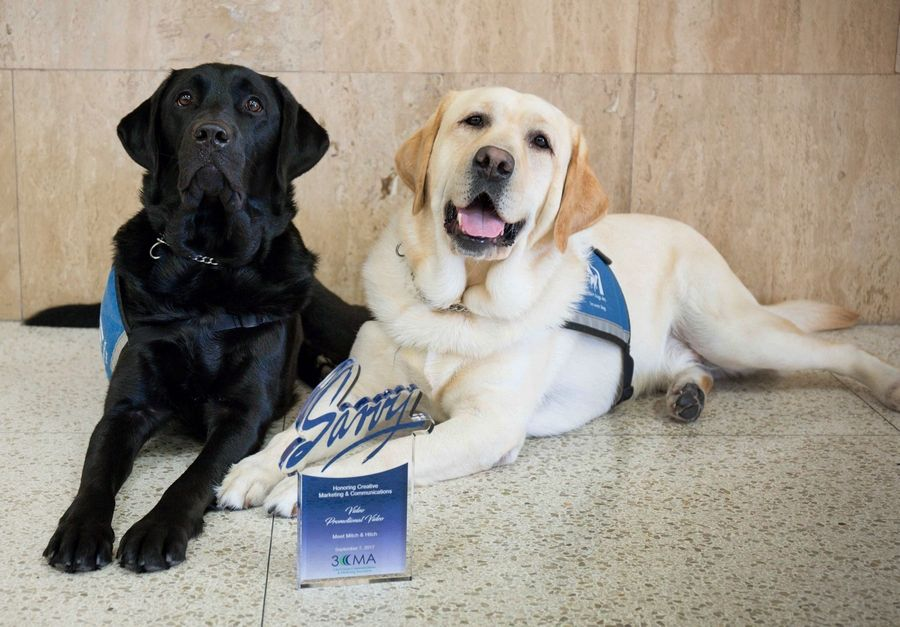 Lake County comfort dogs Hitch, left, and Mitch were part of an award-winning video about their service at the Lake County state's attorney's office.