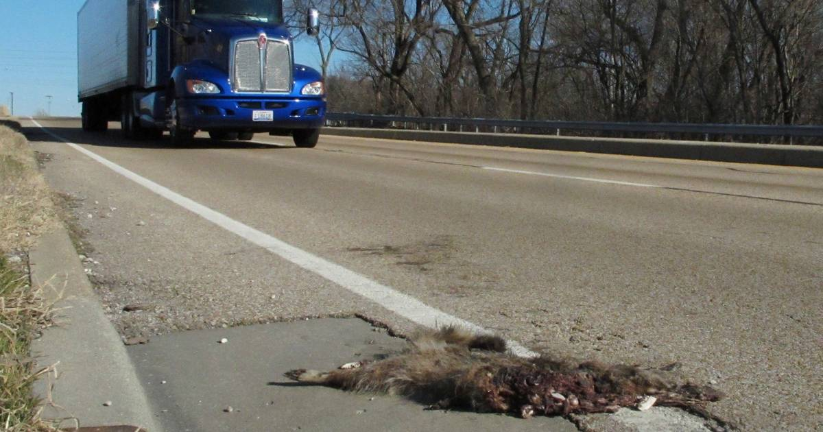 Can technology prevent most roadkill accidents?